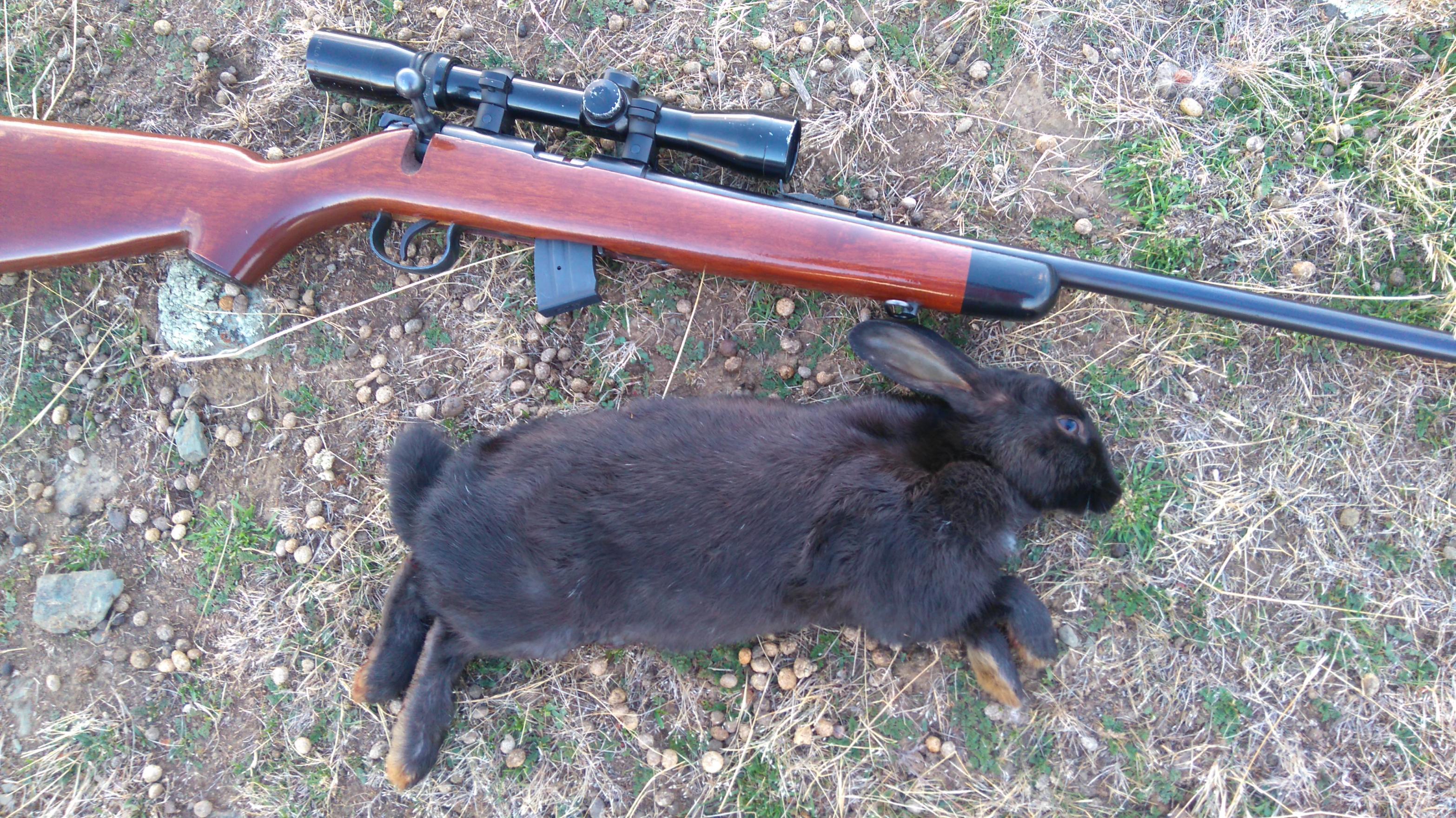 Name:  black rabbit.jpg Views: 322 Size:  1.06 MB