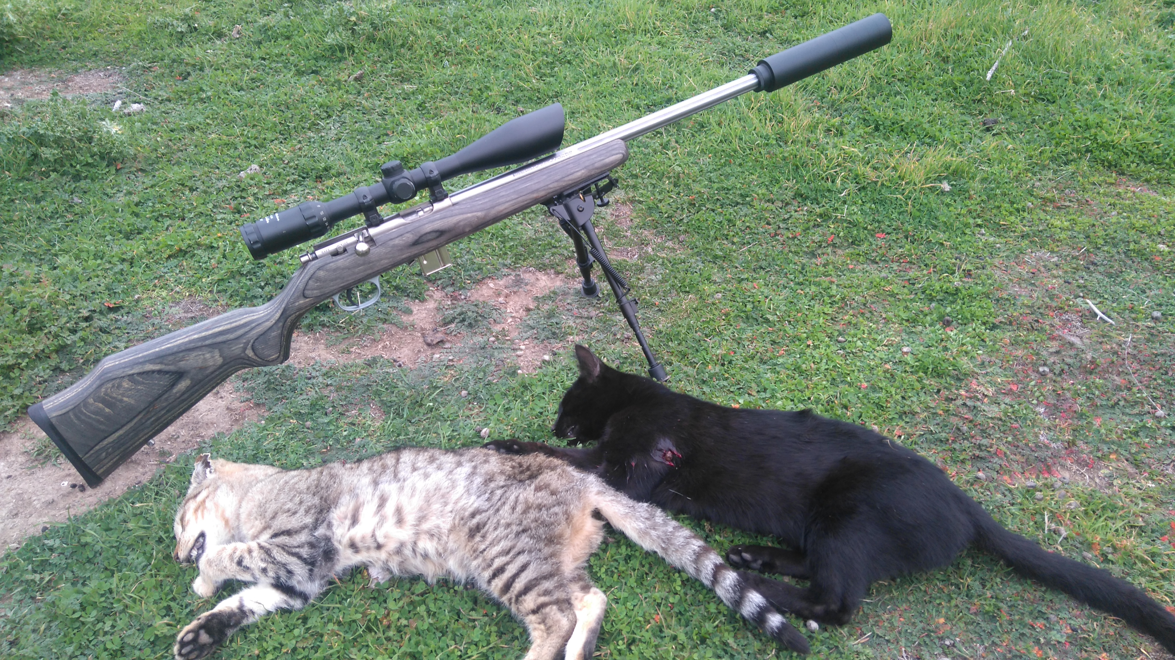Name:  two cats.JPG Views: 120 Size:  4.57 MB
