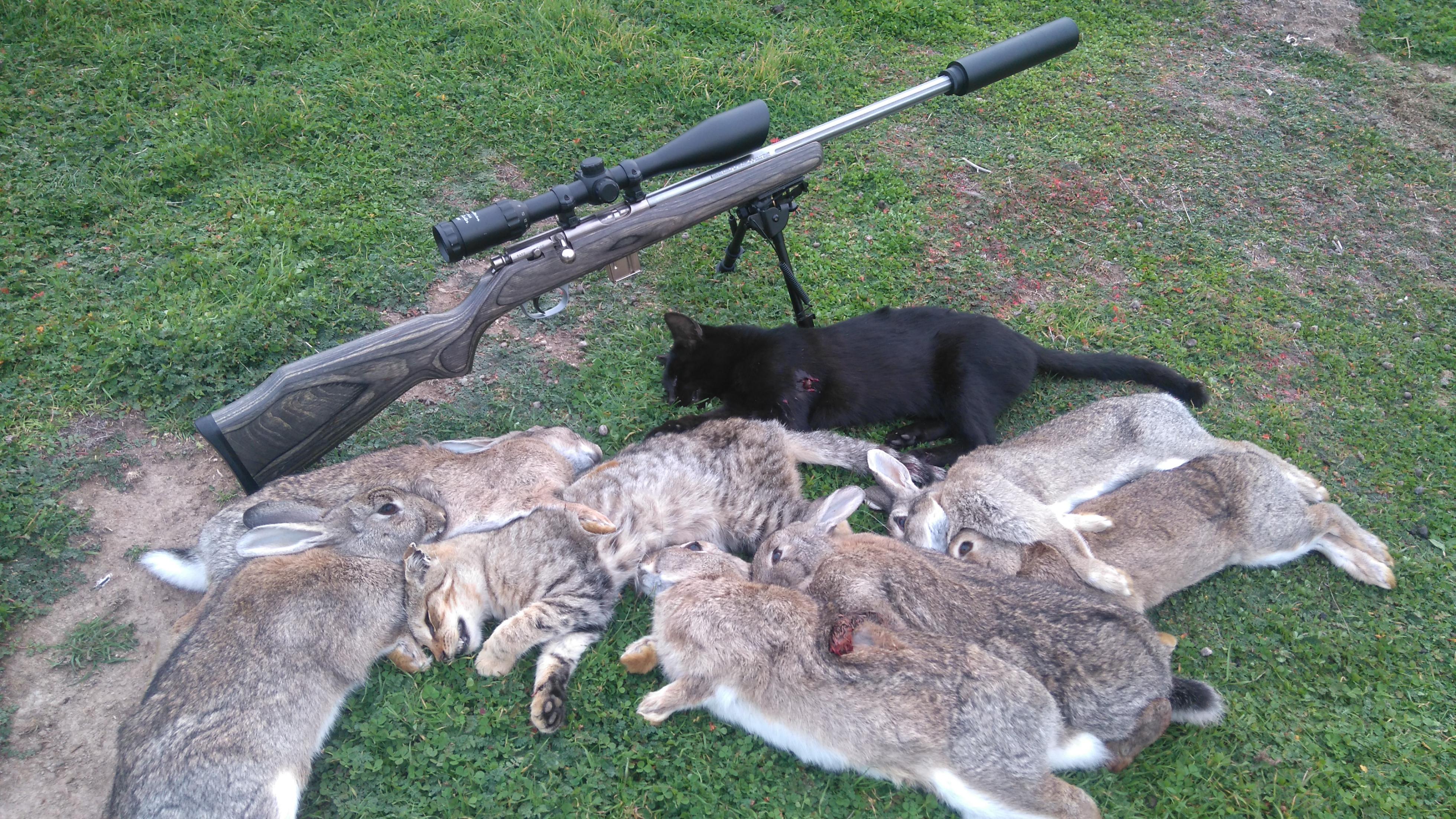 Name:  cats and rabbits.JPG Views: 124 Size:  4.75 MB