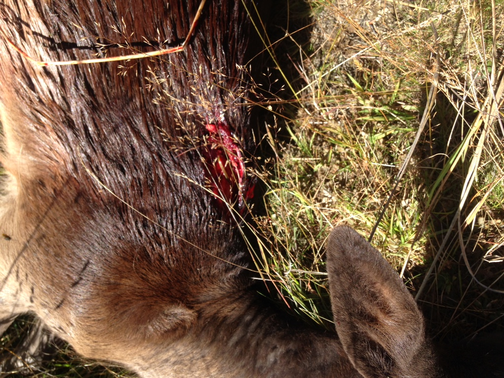 Name:  155TMK on Fallow deer.jpeg