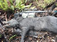 Name:  Bushstalking boar 002.JPG Views: 176 Size:  102.9 KB