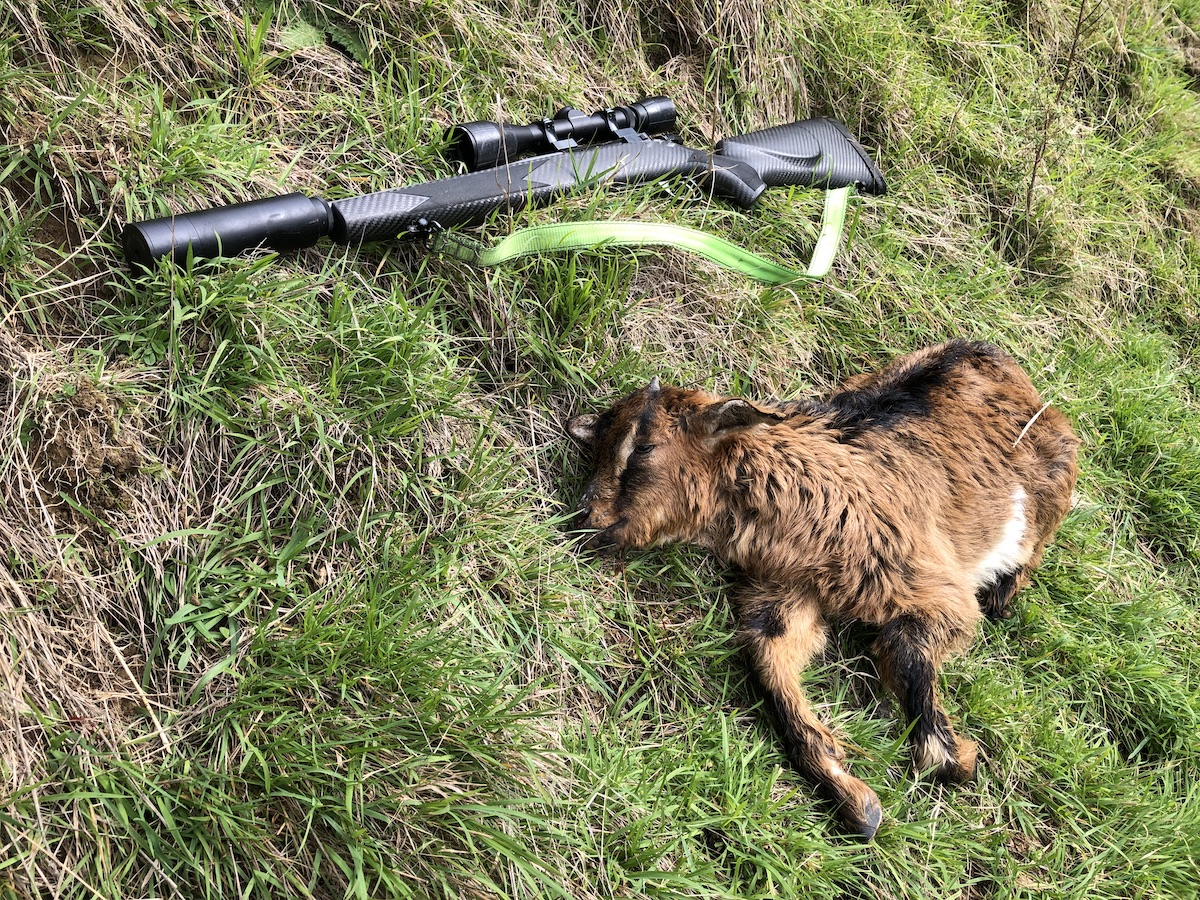 Name:  Kid goat and gun copy.jpg Views: 337 Size:  827.7 KB