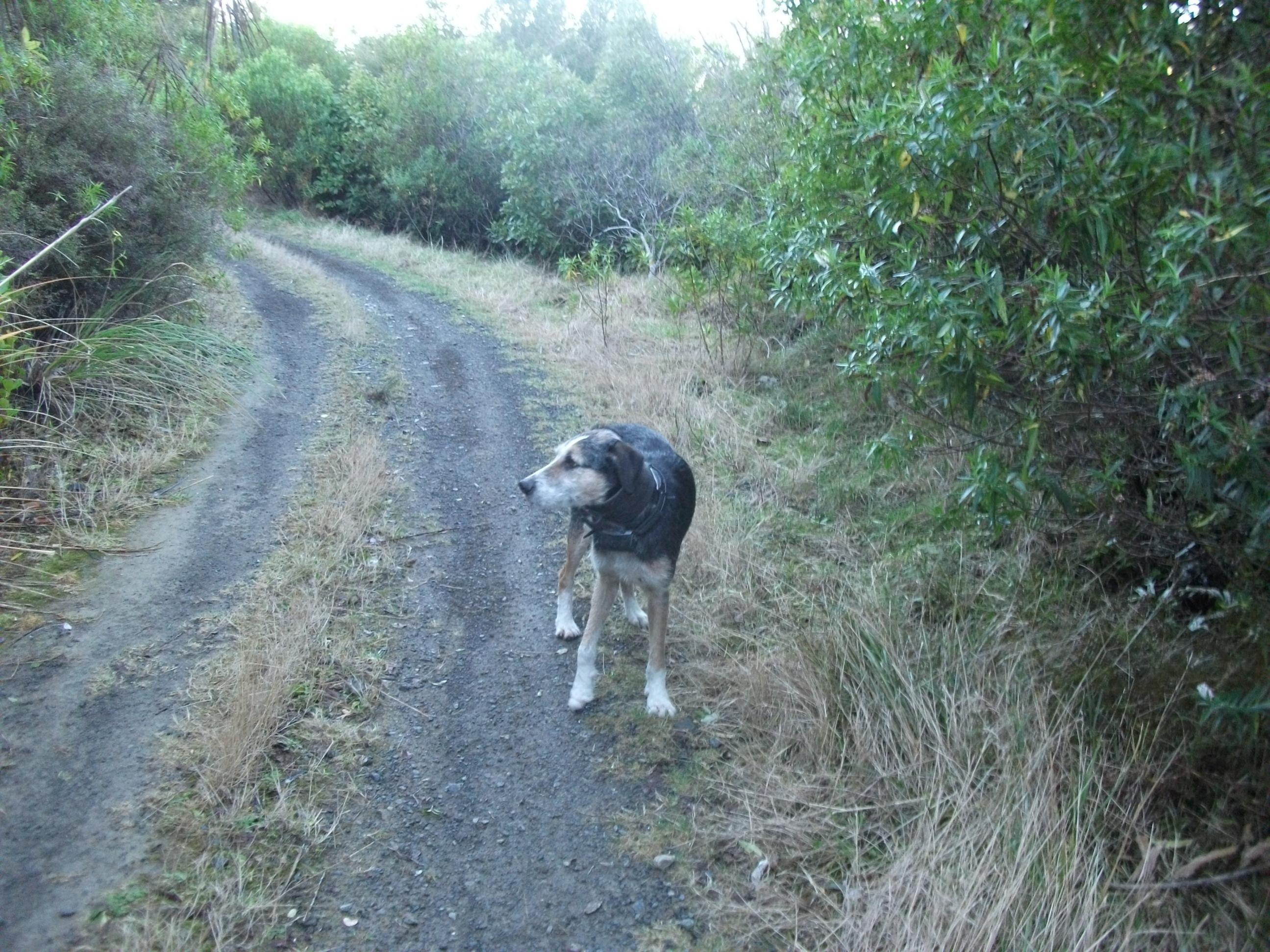 Name:  DSCF0960 lost dog.jpg Views: 528 Size:  771.6 KB