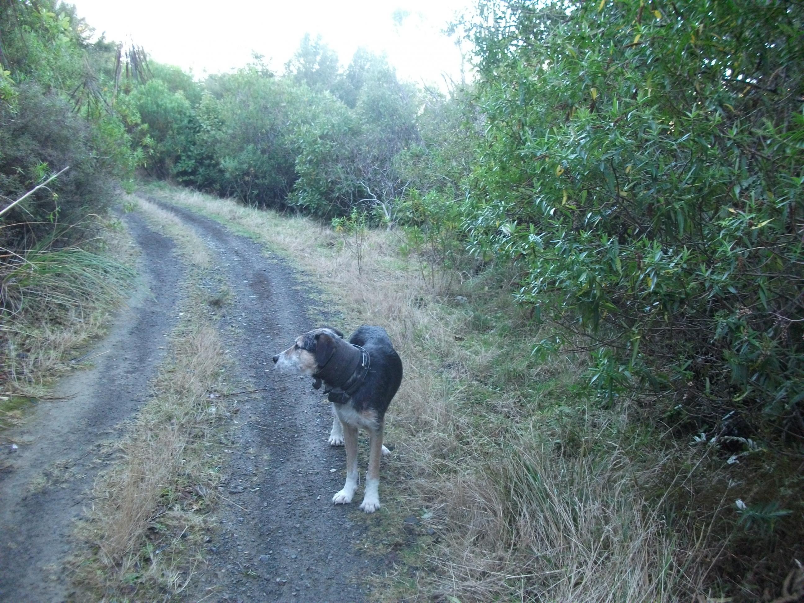 Name:  DSCF0961 lost dog.jpg Views: 570 Size:  827.1 KB