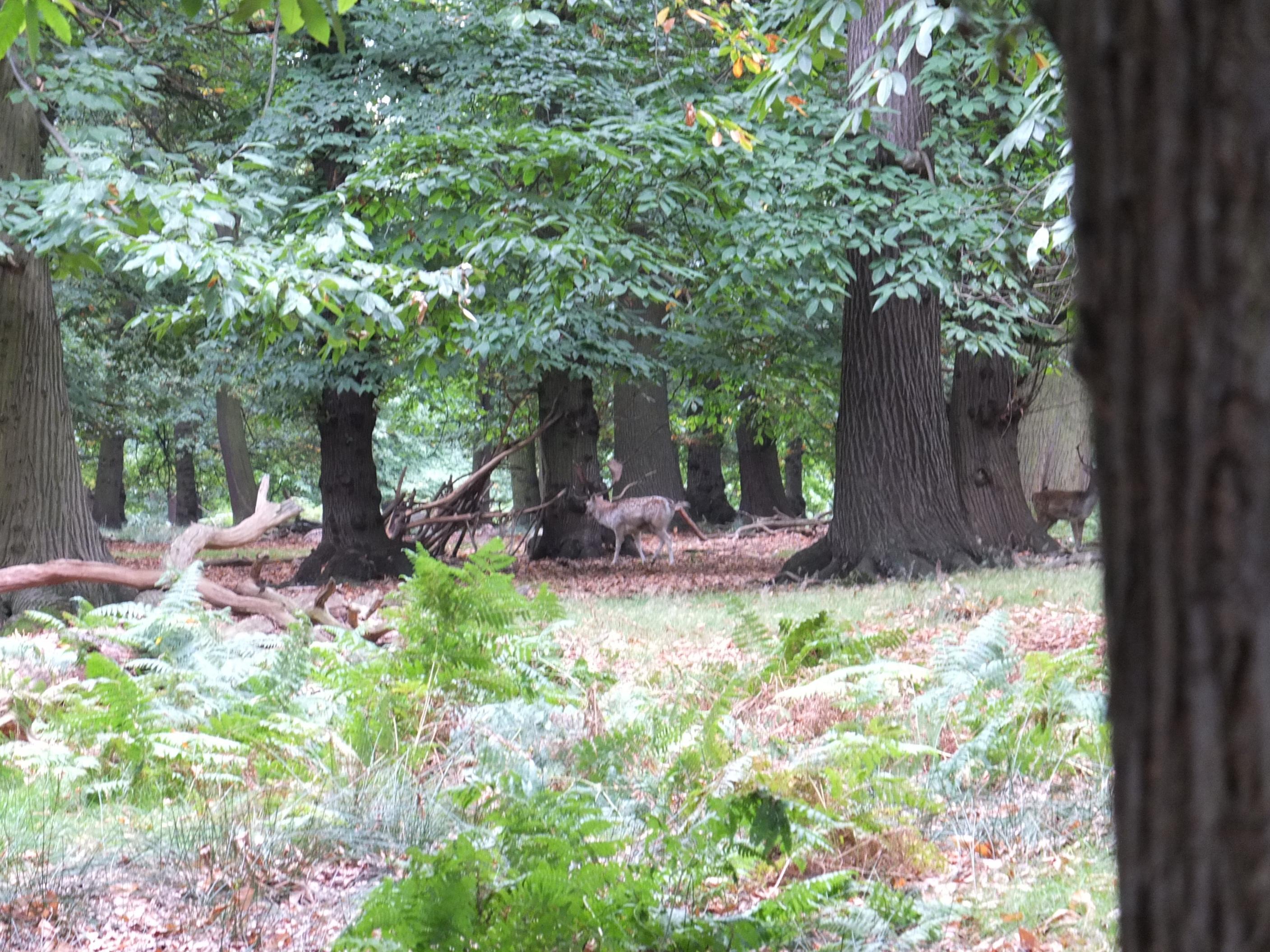 Name:  Deer (16).jpg Views: 618 Size:  861.6 KB