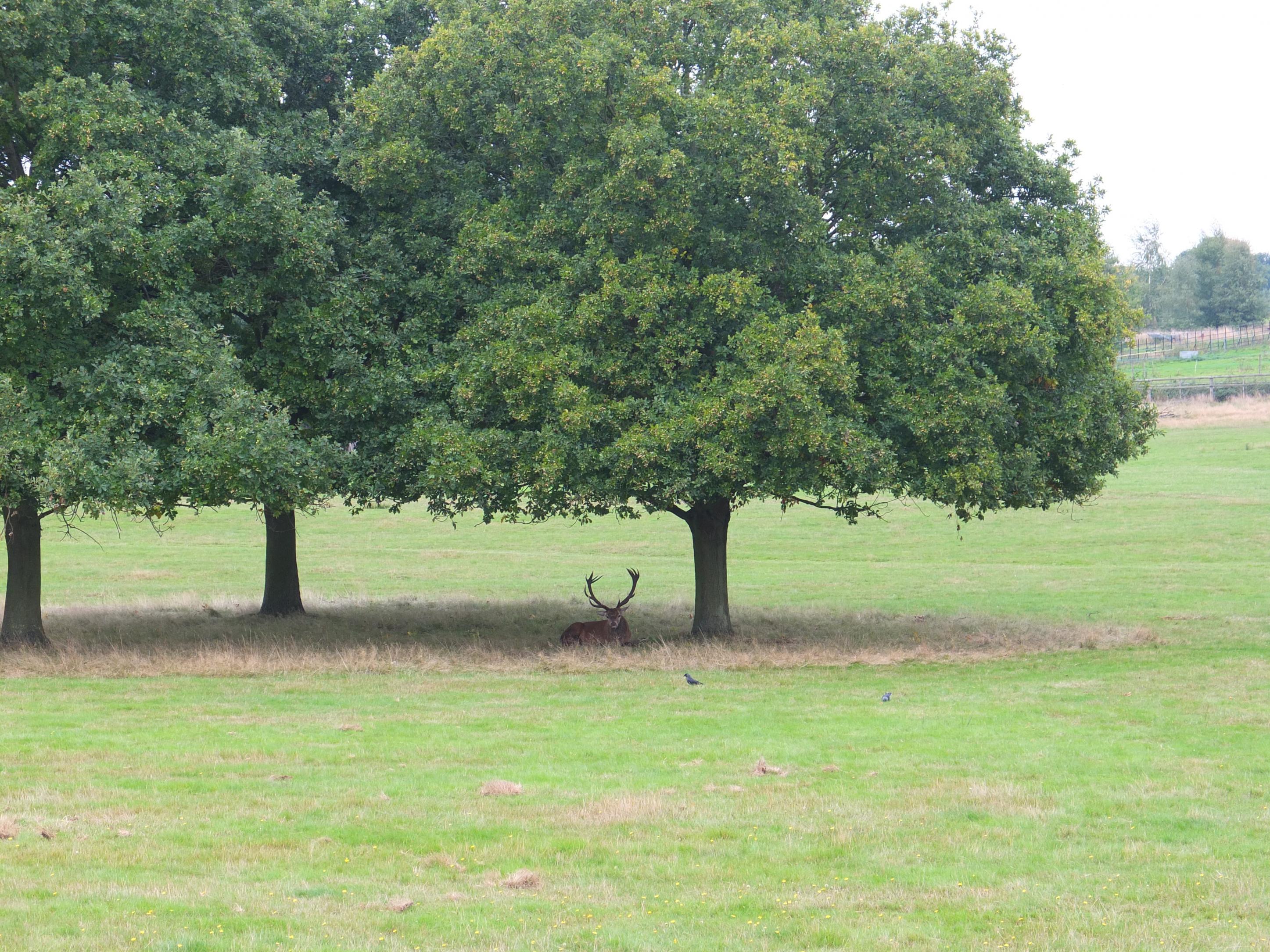 Name:  Deer (18).jpg Views: 440 Size:  1.09 MB