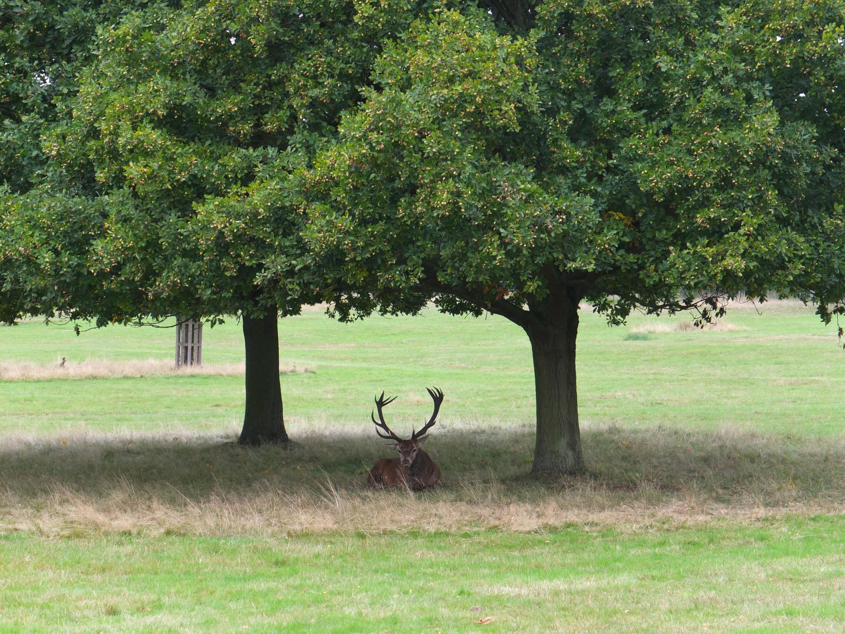 Name:  Deer (19).jpg Views: 476 Size:  1.09 MB