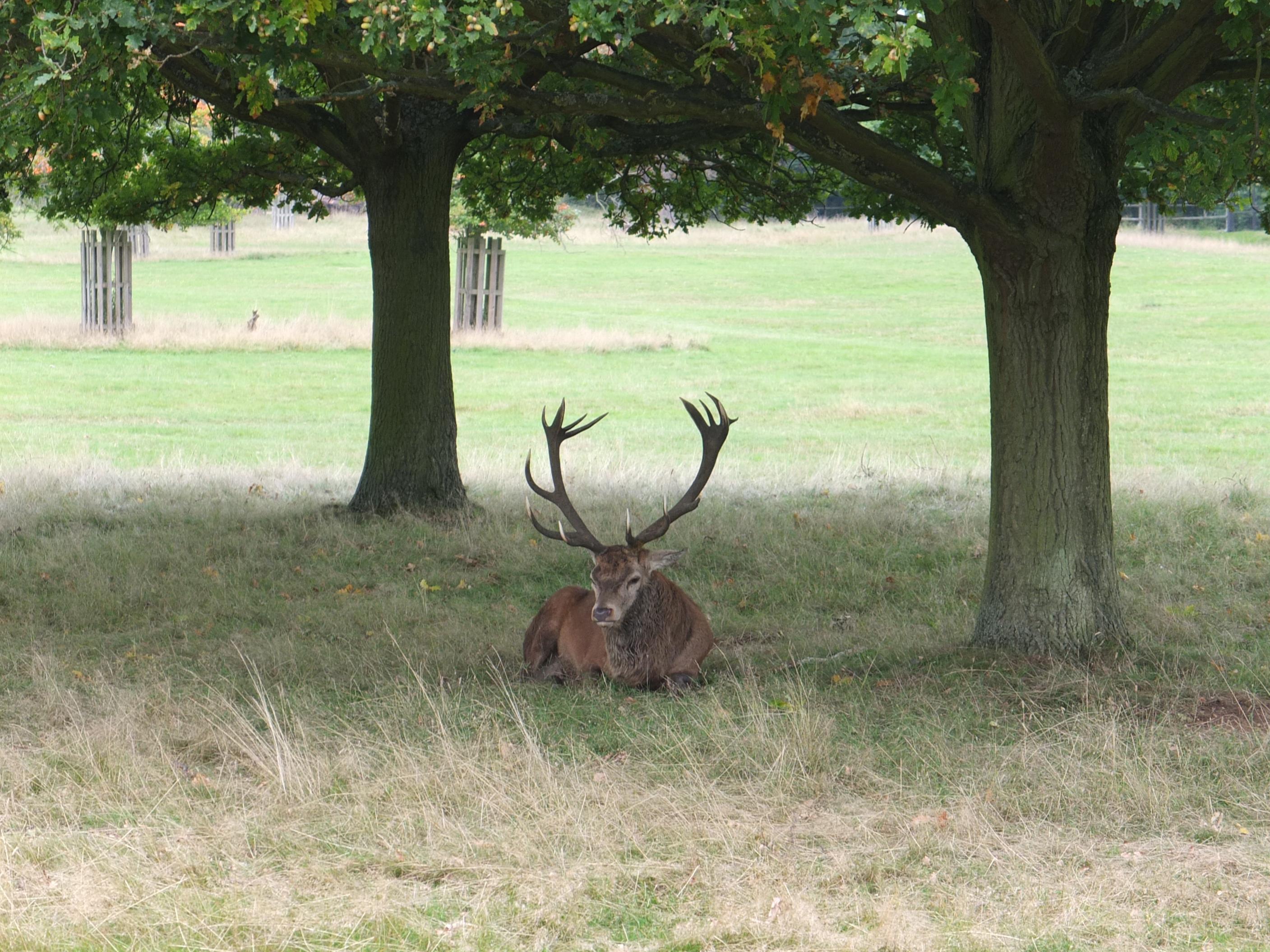 Name:  Deer (20).jpg Views: 1197 Size:  825.8 KB
