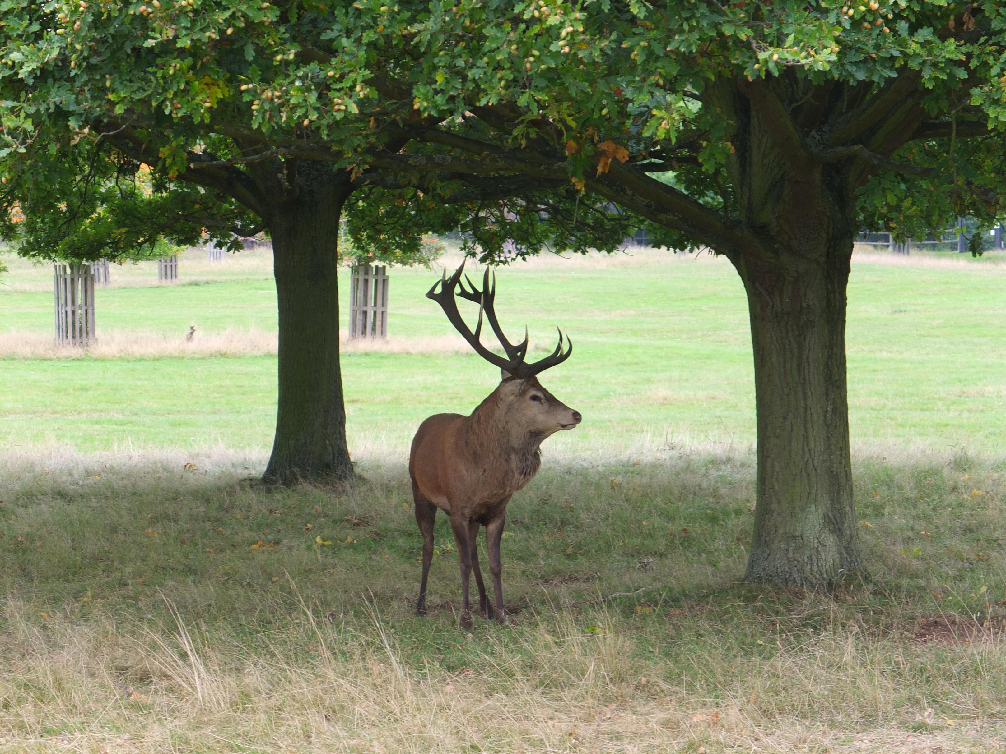Name:  Deer (21).jpg Views: 388 Size:  1.04 MB