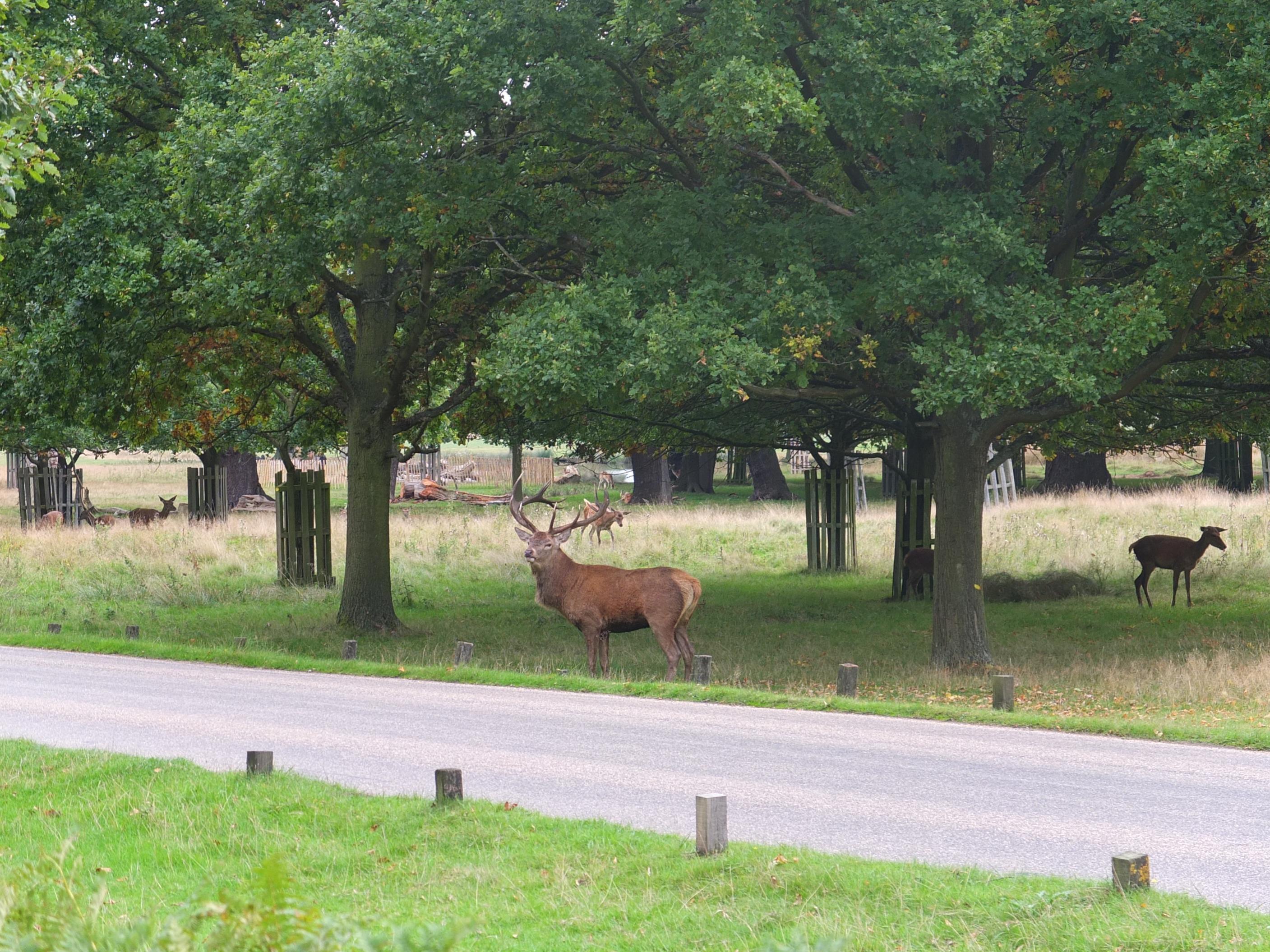 Name:  Deer (22).jpg Views: 2339 Size:  966.1 KB