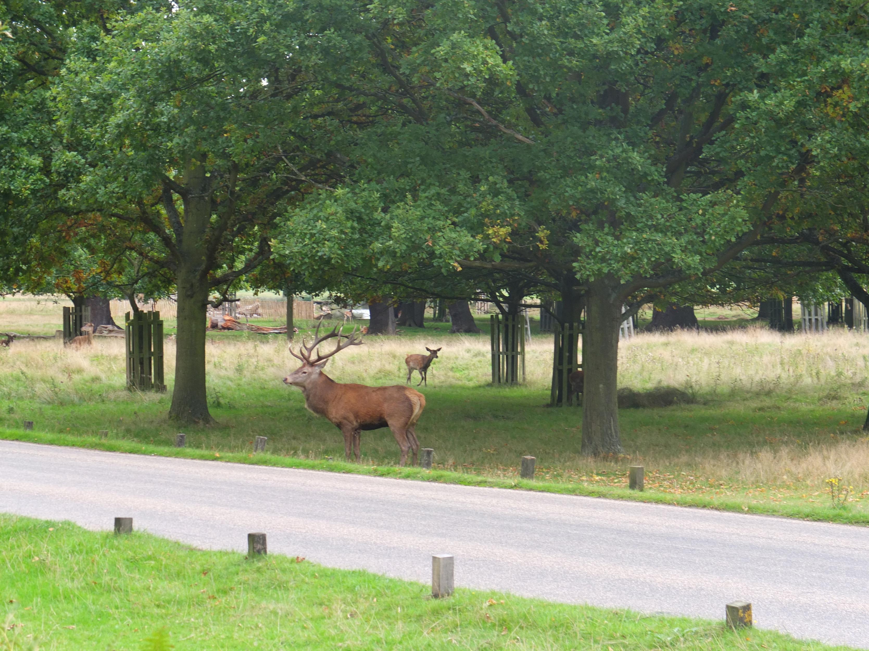 Name:  Deer (23).jpg Views: 418 Size:  1.03 MB