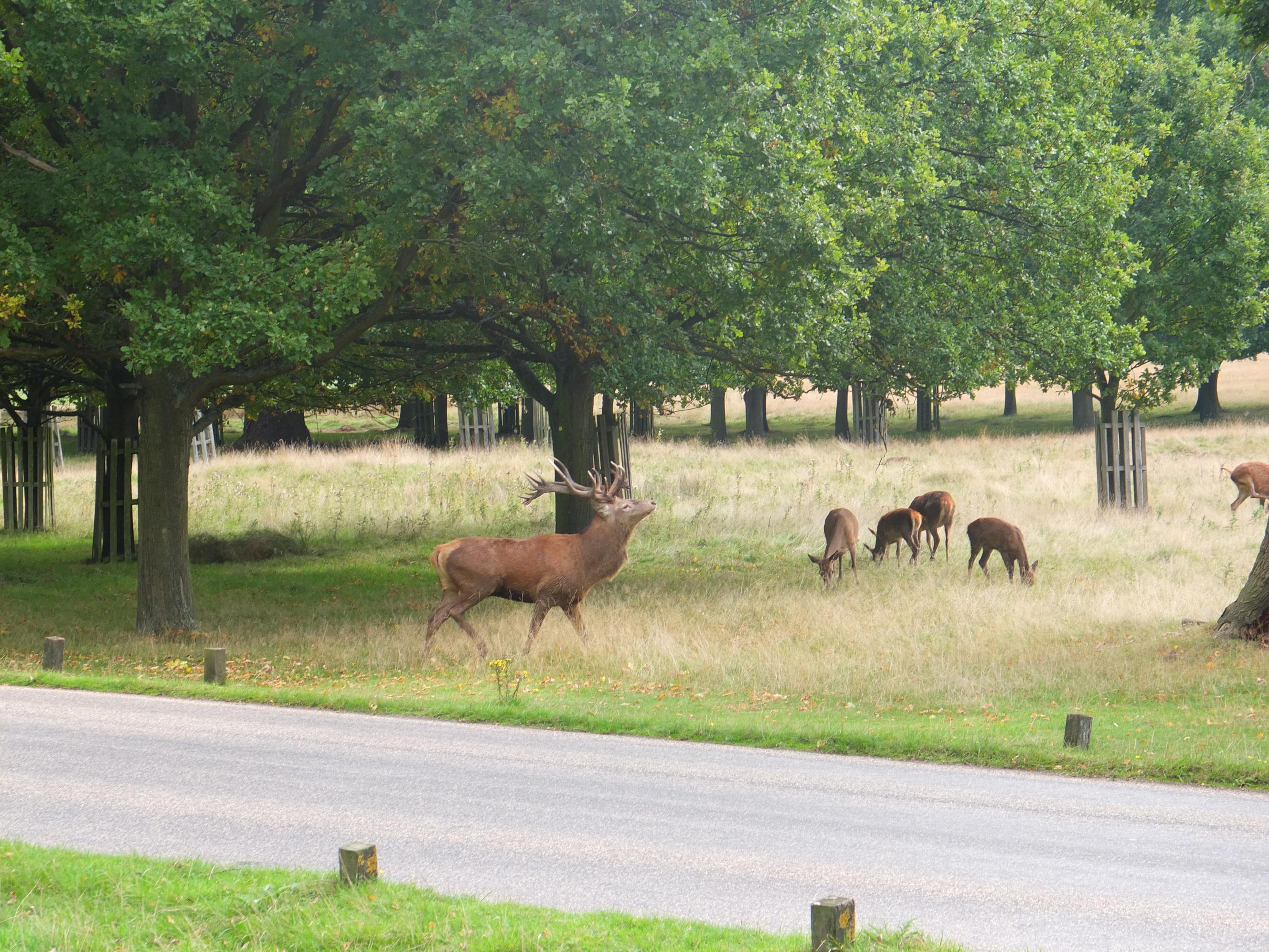 Name:  Deer (24).jpg Views: 585 Size:  1.07 MB