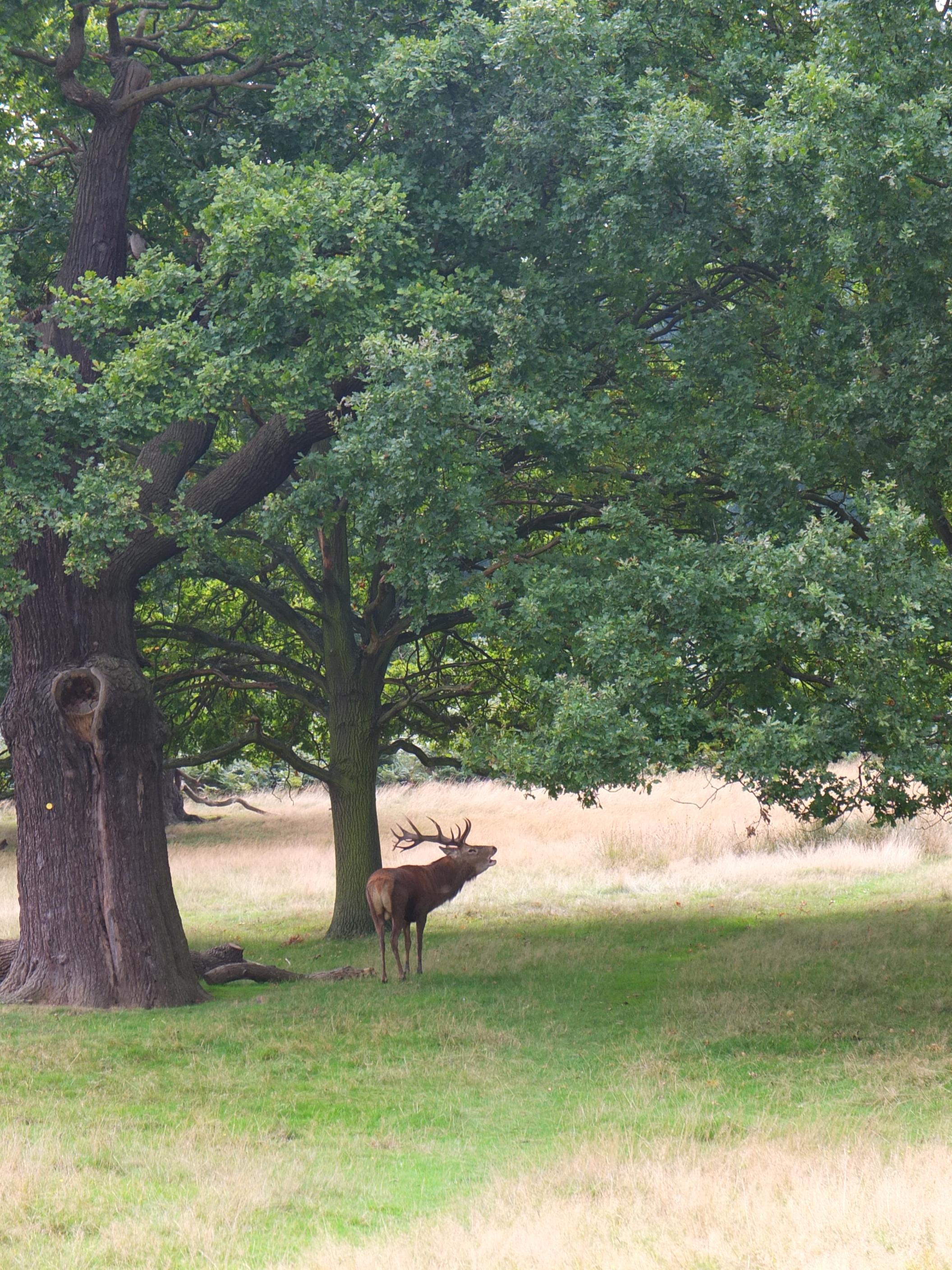 Name:  Deer (25).jpg Views: 368 Size:  962.5 KB