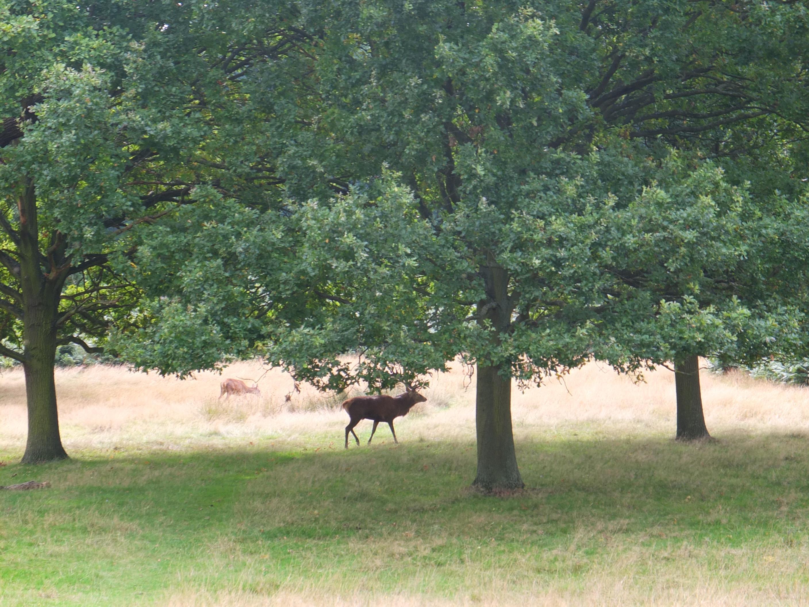 Name:  Deer (26).jpg Views: 1222 Size:  814.3 KB
