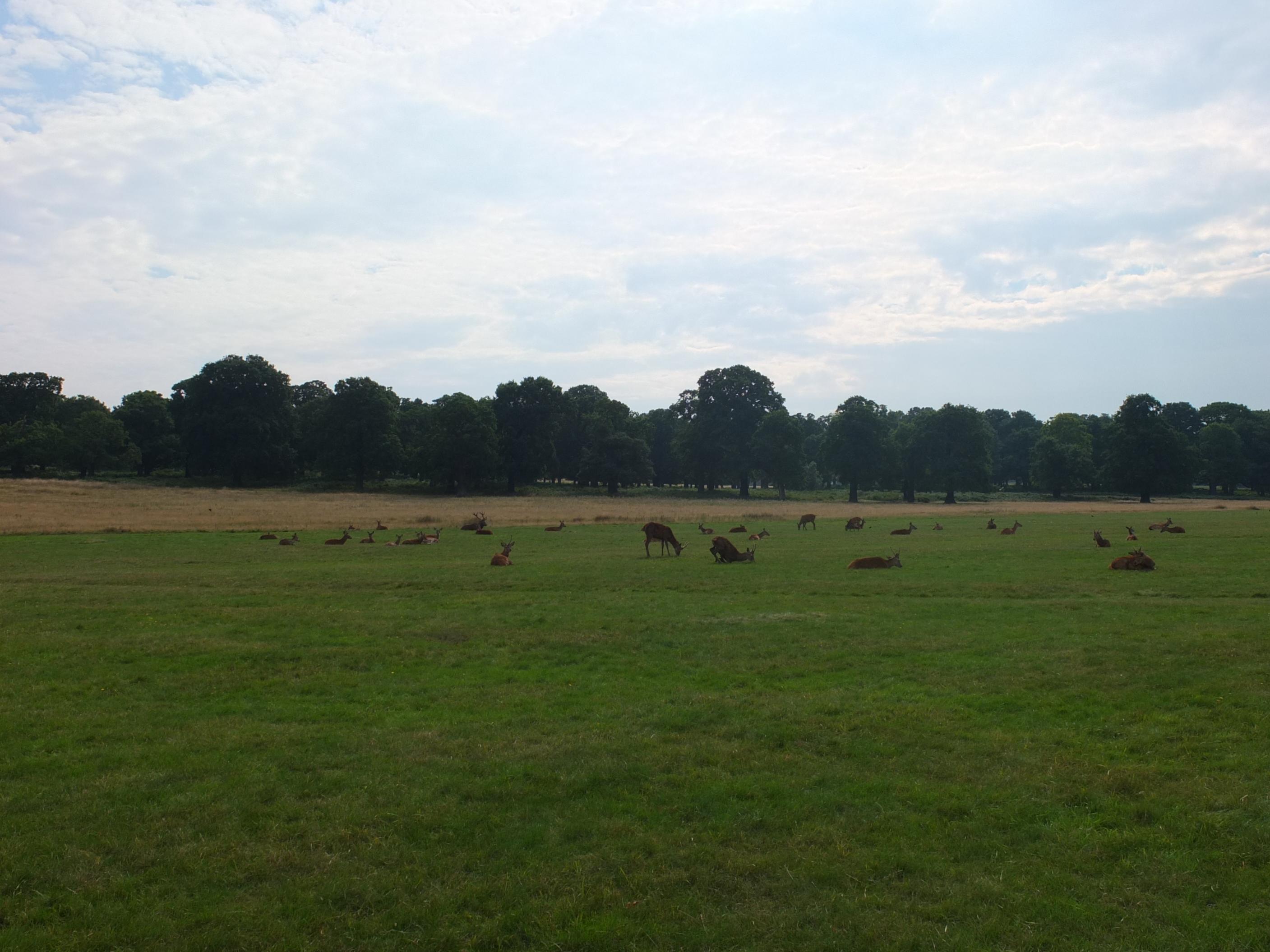 Name:  Deer (31).jpg Views: 415 Size:  452.5 KB