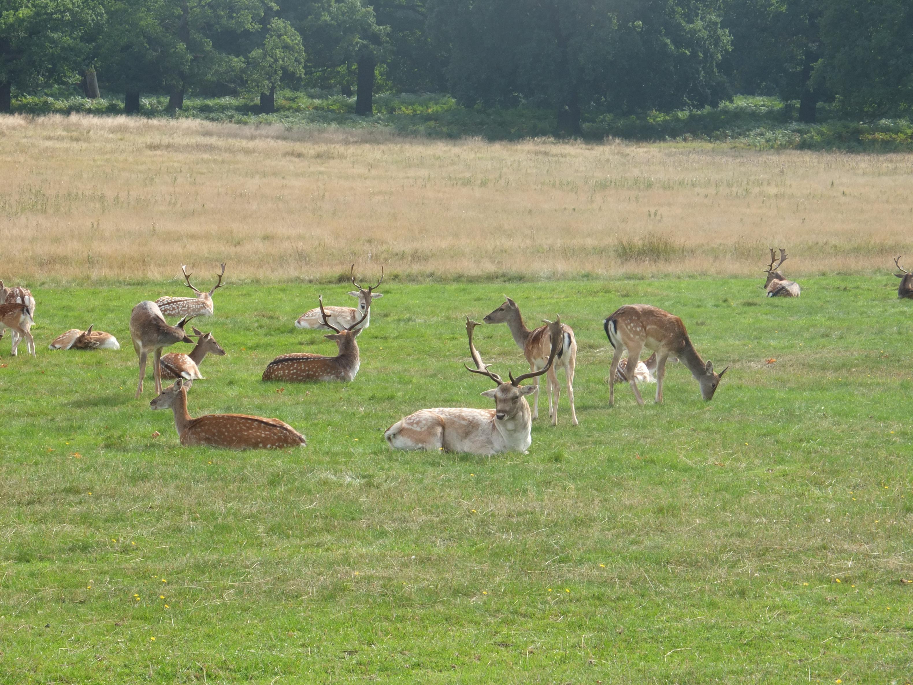Name:  Deer (33).jpg Views: 811 Size:  1.04 MB