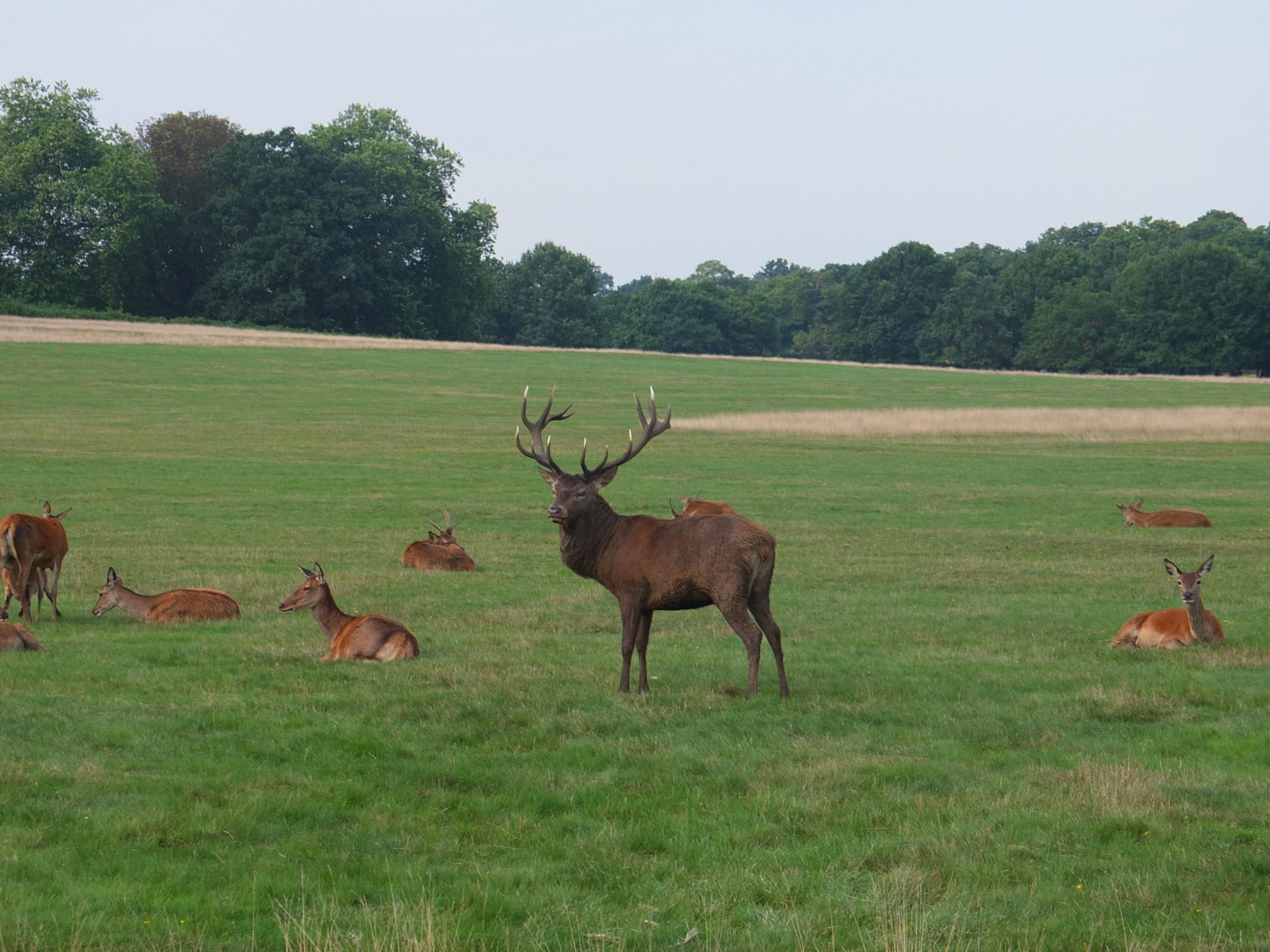 Name:  Deer (34).jpg Views: 1396 Size:  578.7 KB