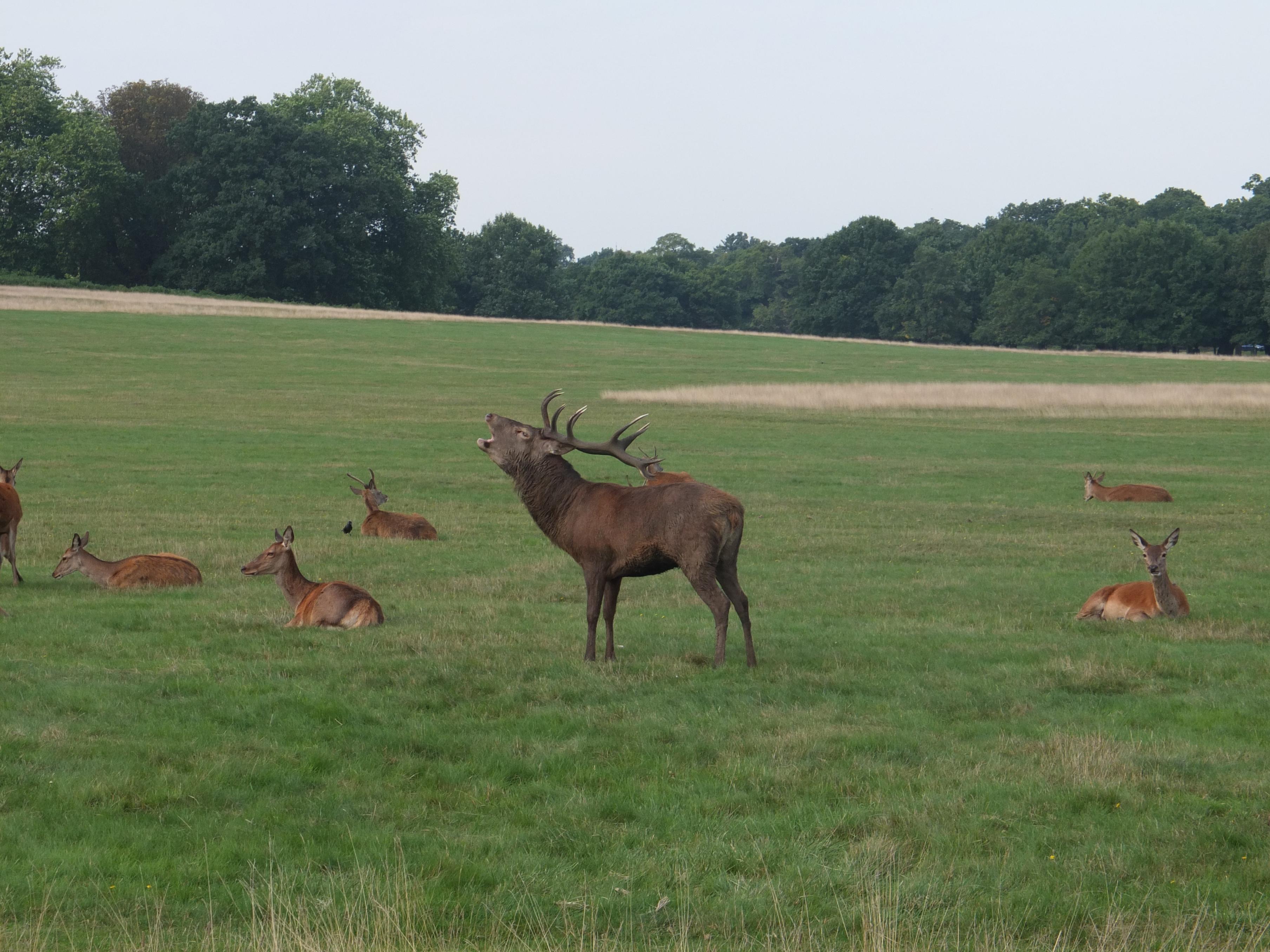 Name:  Deer (36).jpg Views: 3277 Size:  1,015.4 KB