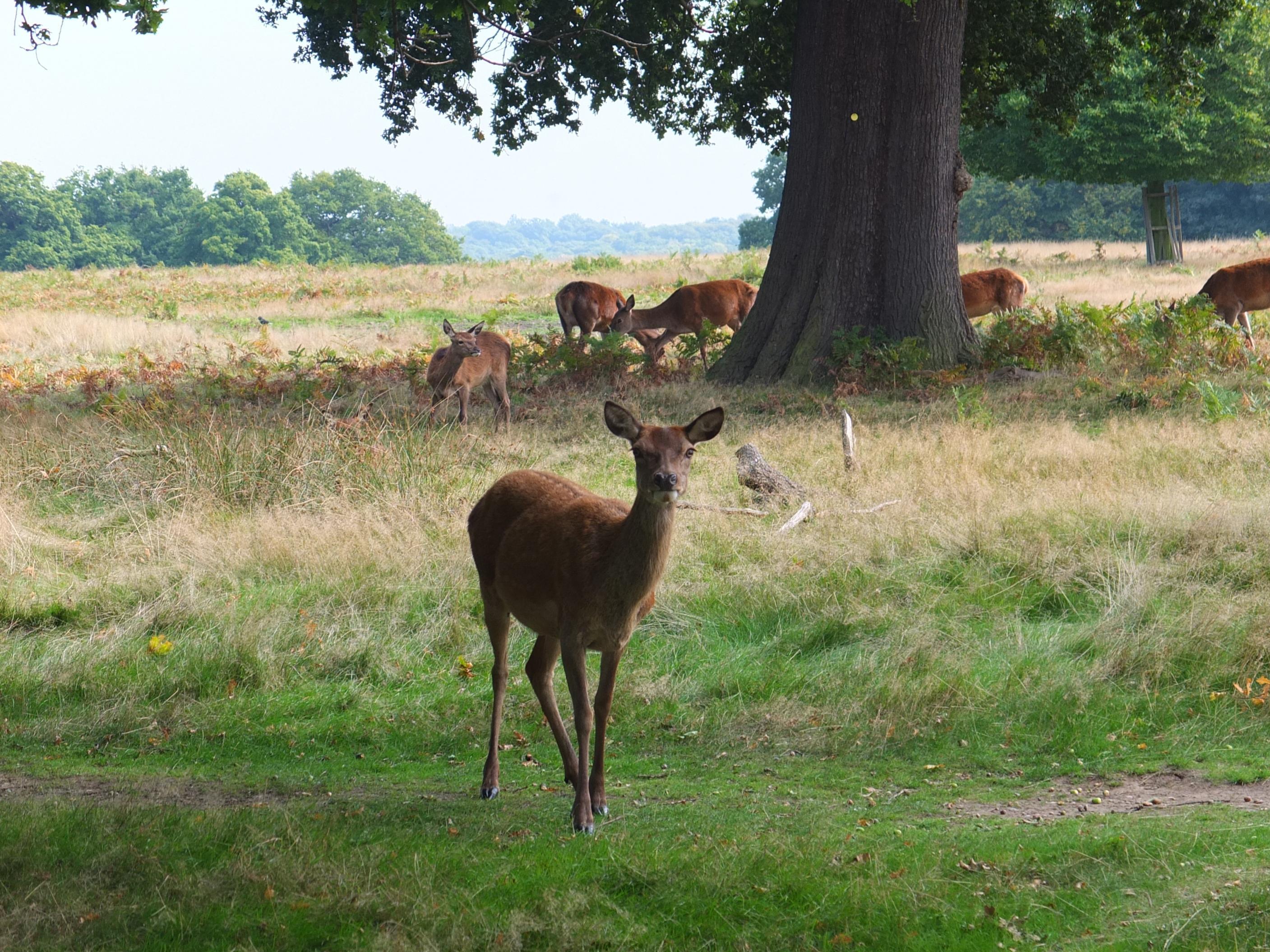 Name:  Deer (38).jpg Views: 397 Size:  957.5 KB