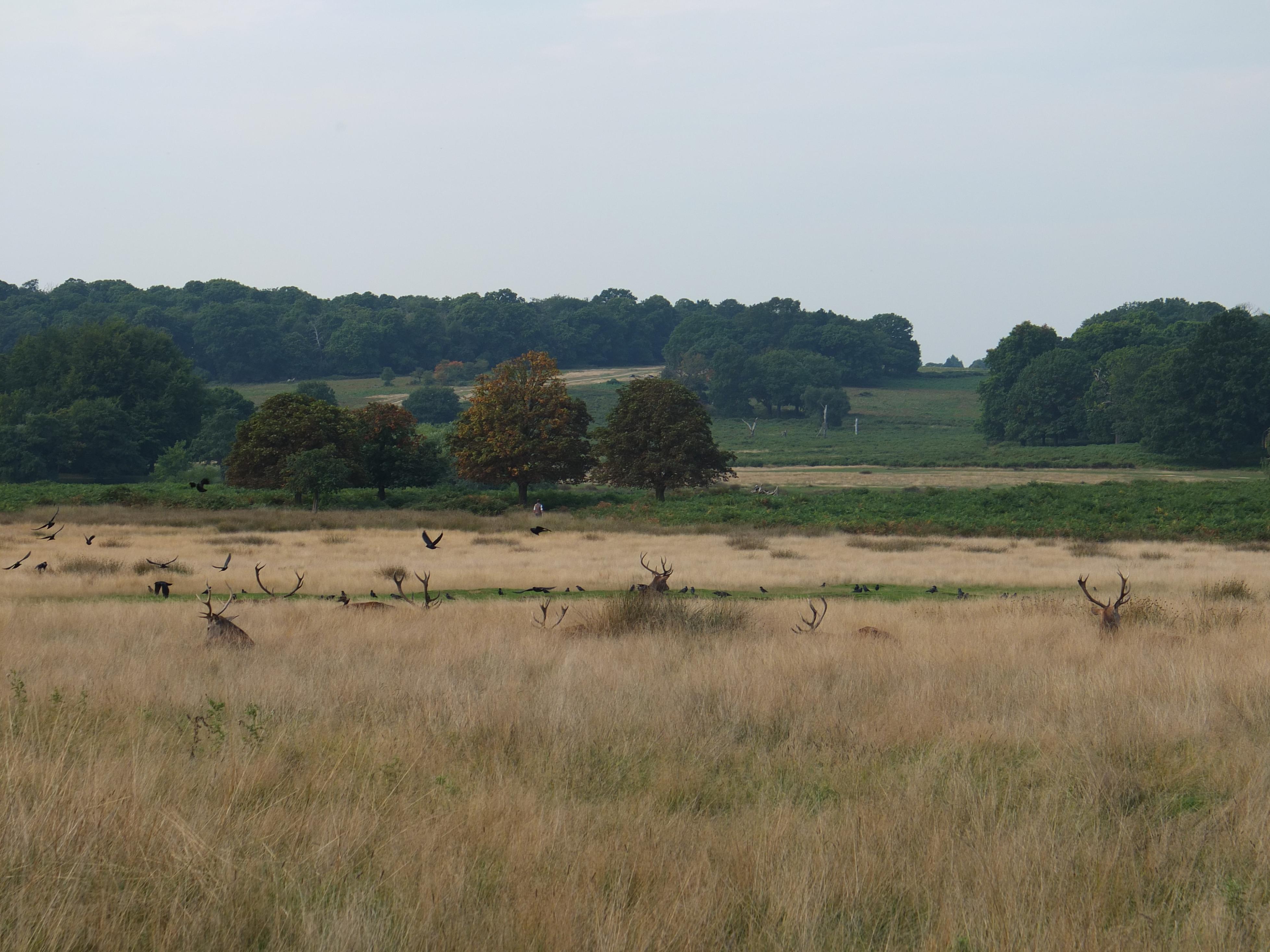 Name:  Deer (39).jpg Views: 535 Size:  989.3 KB