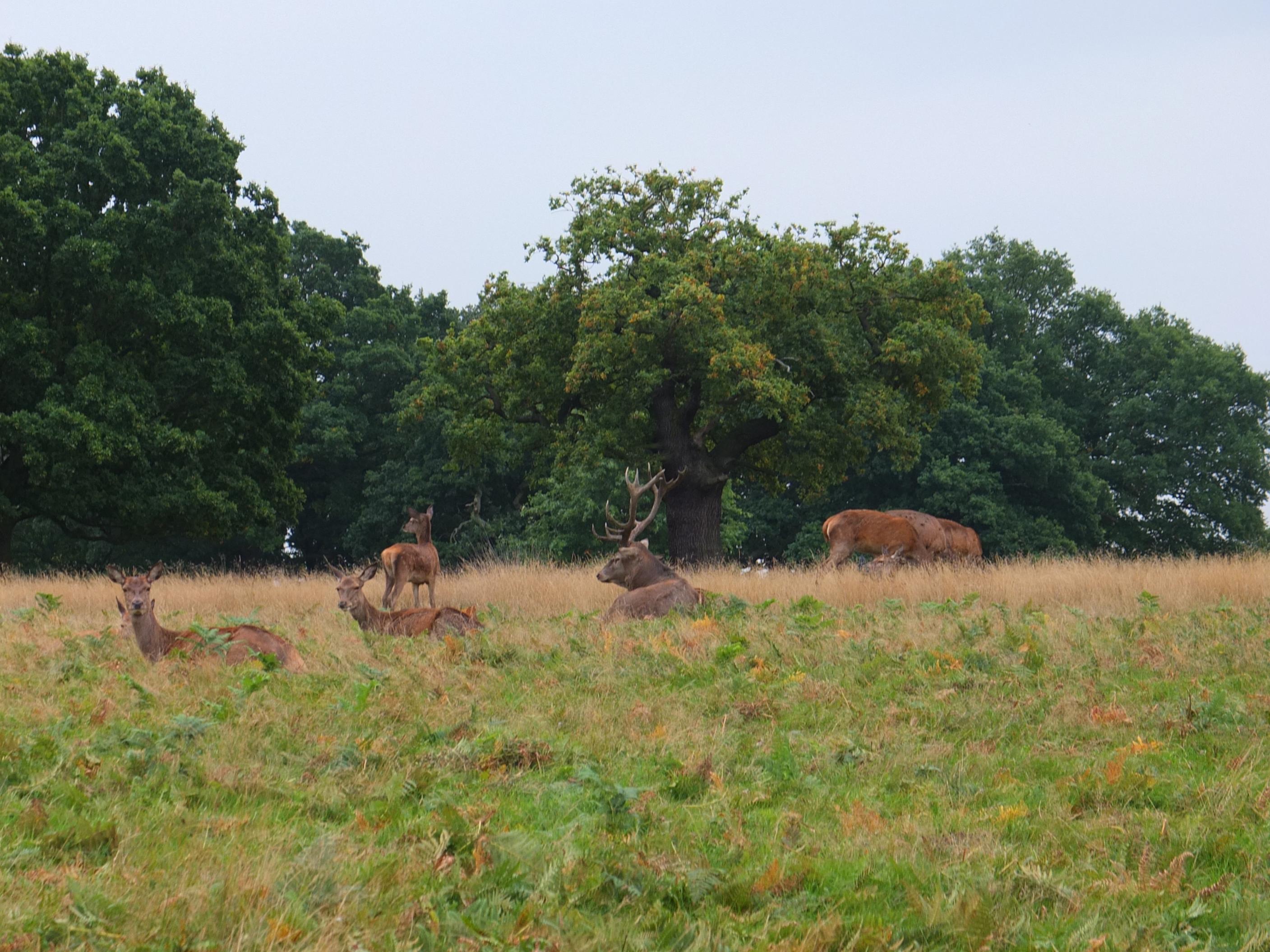 Name:  Deer (2).jpg Views: 329 Size:  683.3 KB