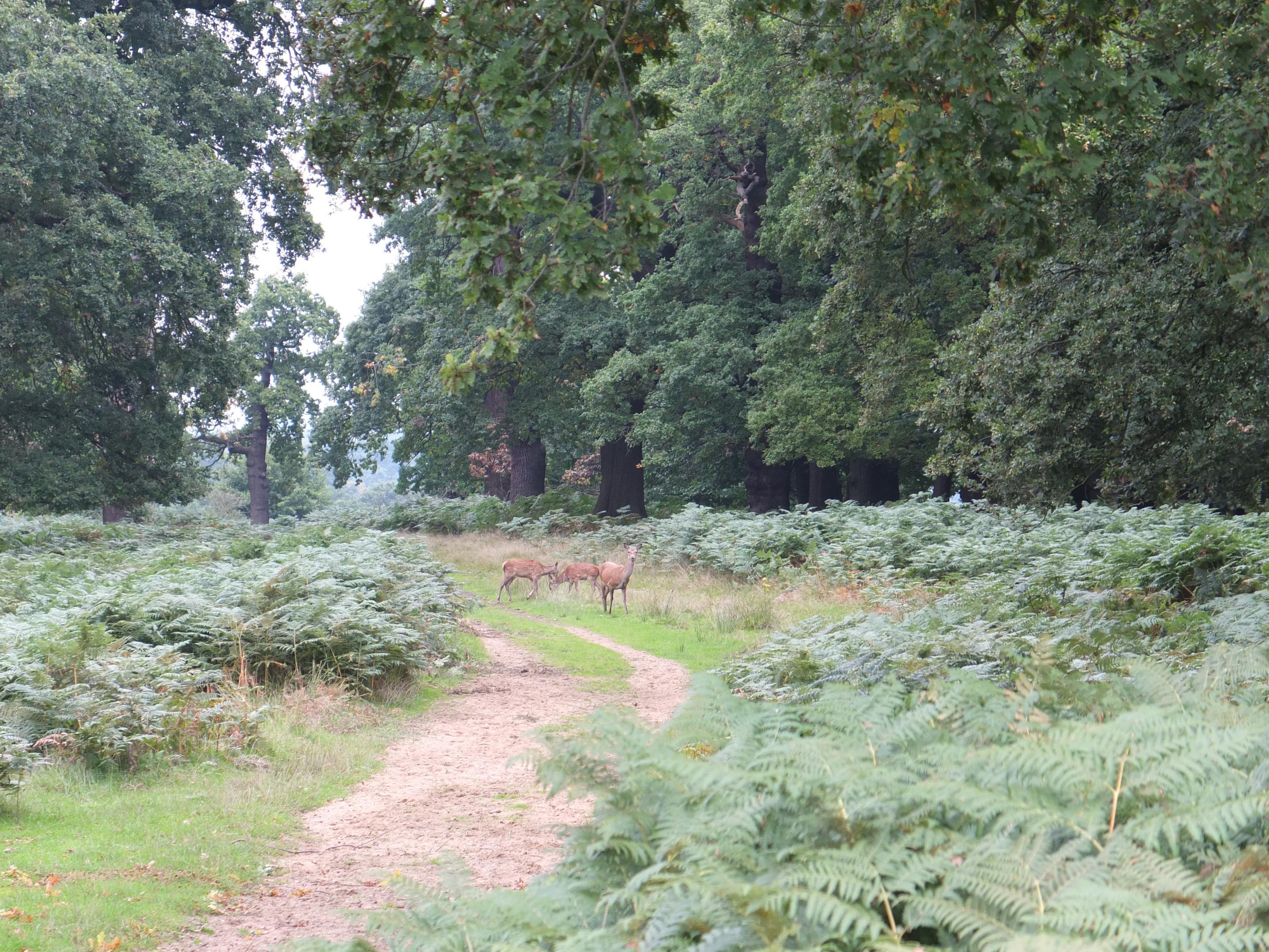 Name:  Deer (3).jpg Views: 323 Size:  1.10 MB