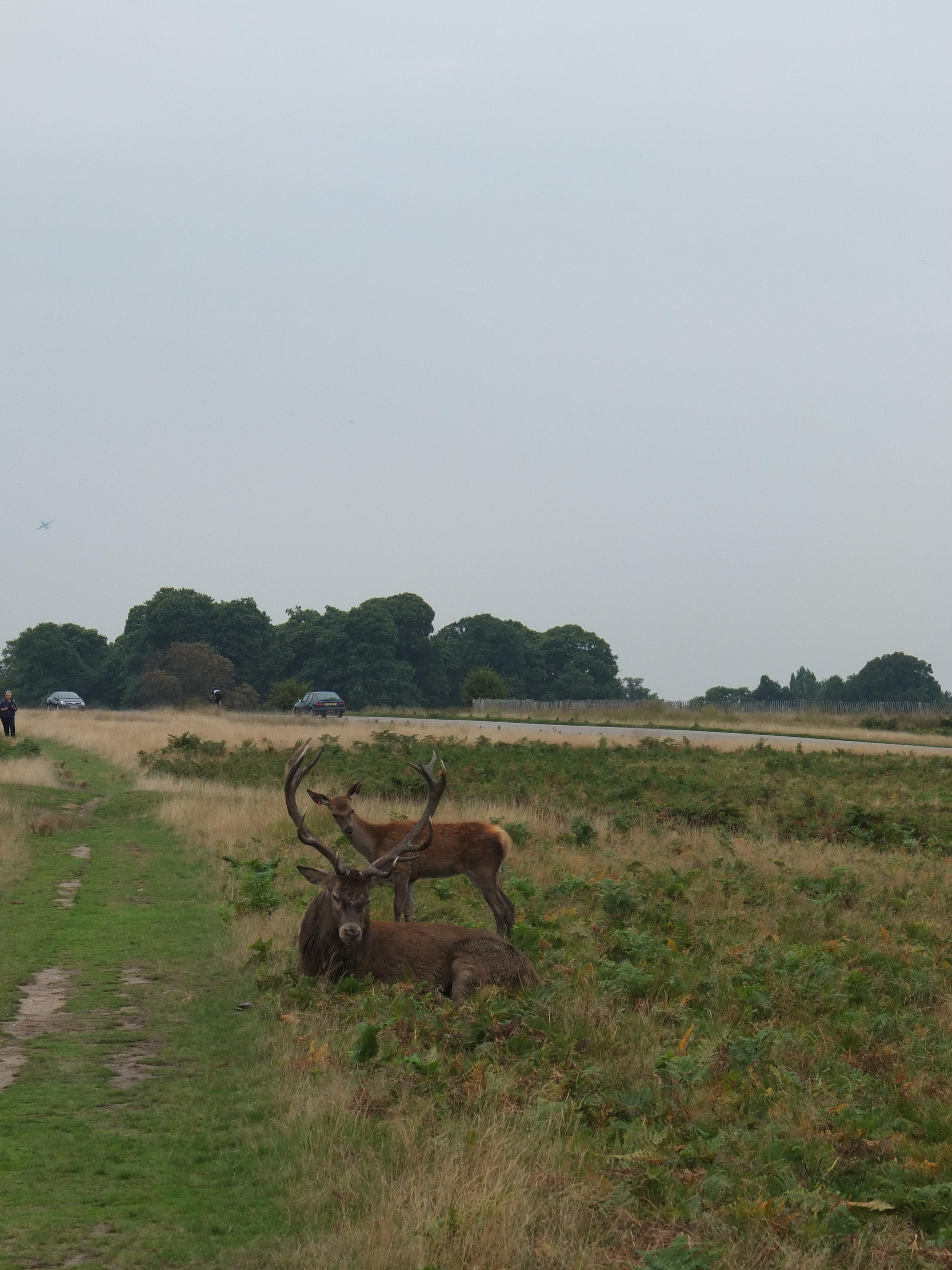Name:  Deer (6).jpg Views: 394 Size:  921.9 KB
