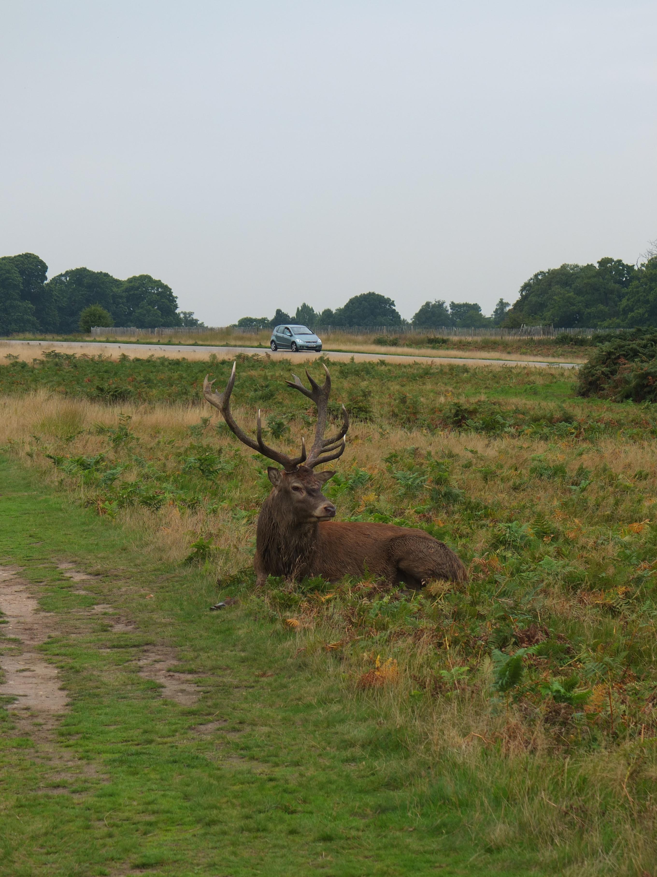 Name:  Deer (7).jpg Views: 354 Size:  1,014.1 KB