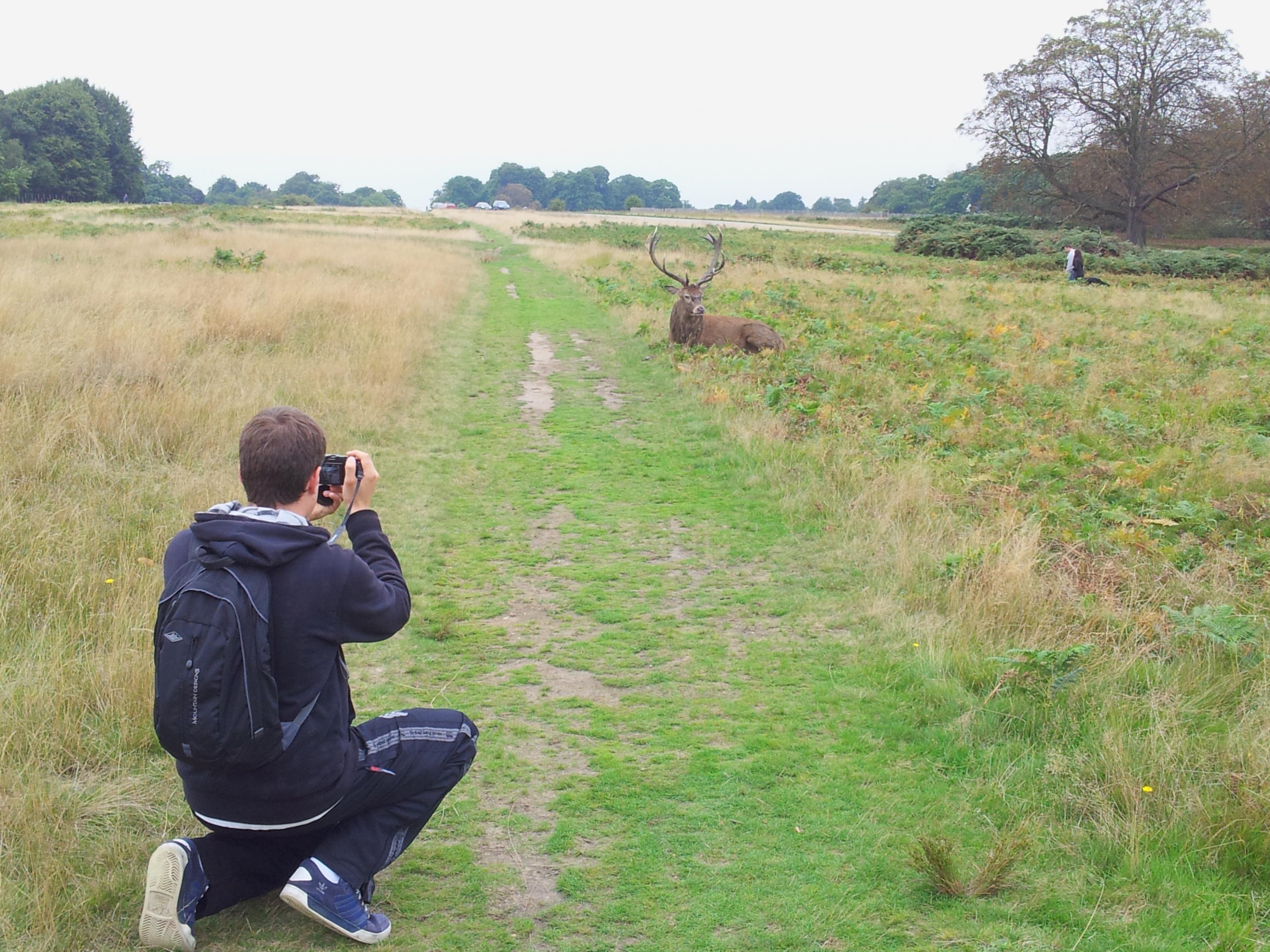 Name:  Deer (8).jpg Views: 333 Size:  939.5 KB