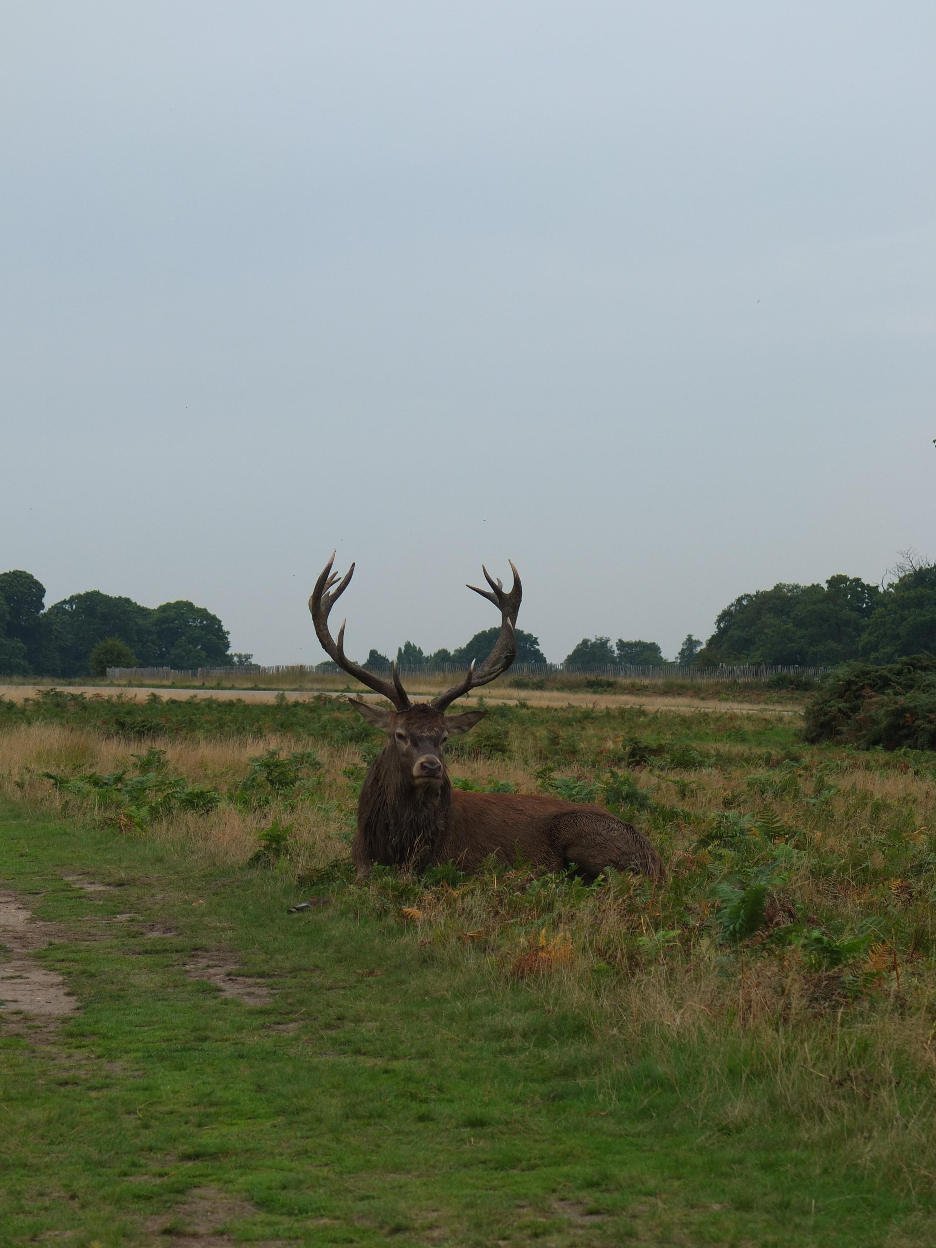 Name:  Deer (9).jpg Views: 350 Size:  892.3 KB