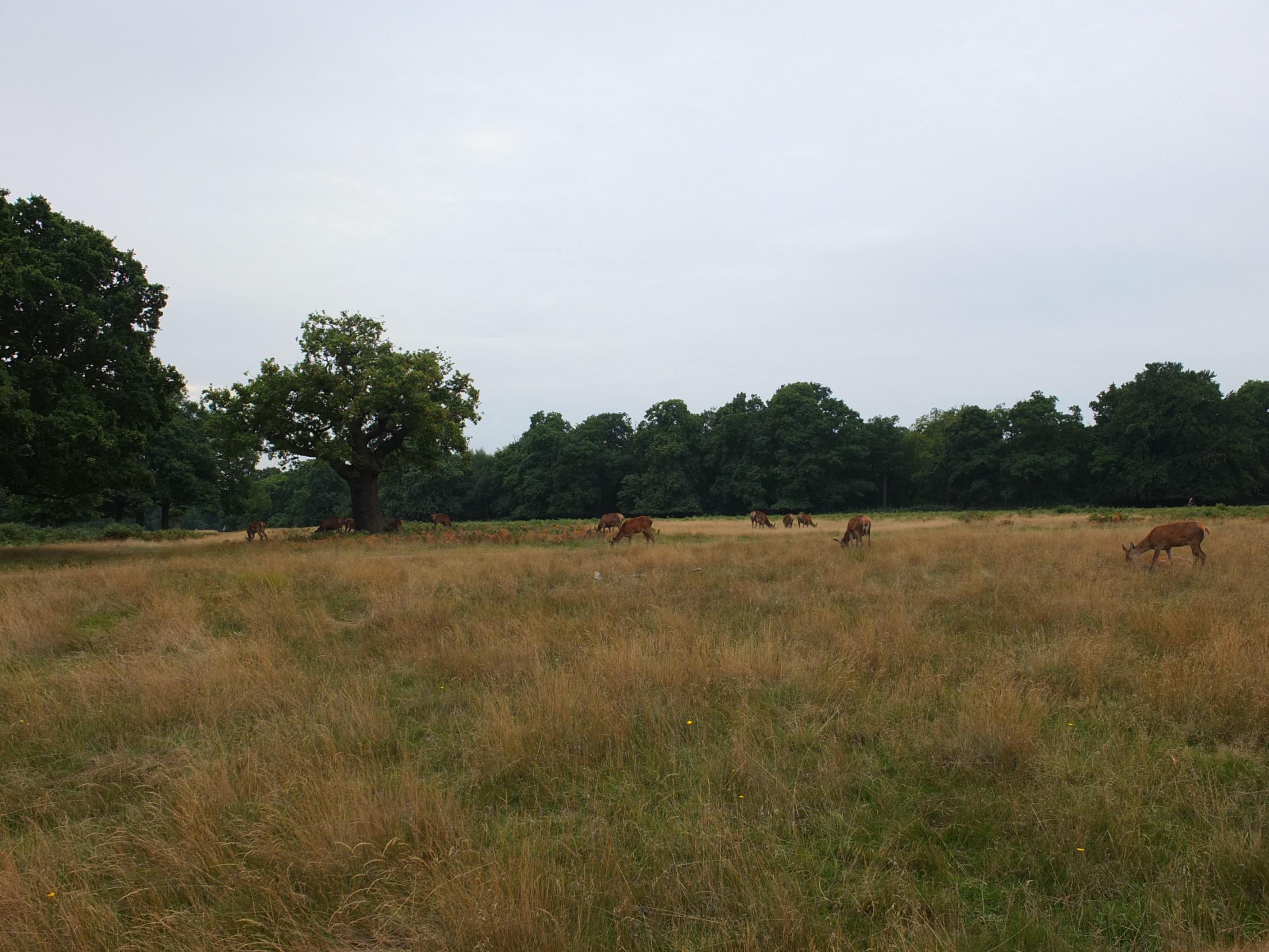 Name:  Deer (12).jpg Views: 273 Size:  611.5 KB