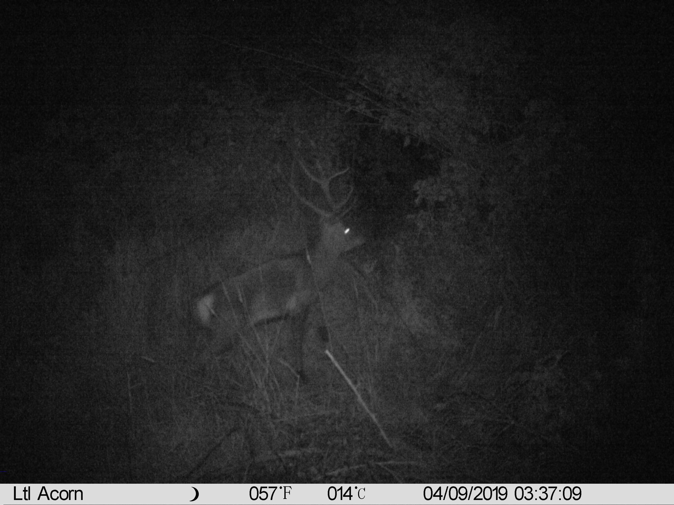 Name:  IMAG0003 Deer.JPG Views: 581 Size:  1.03 MB