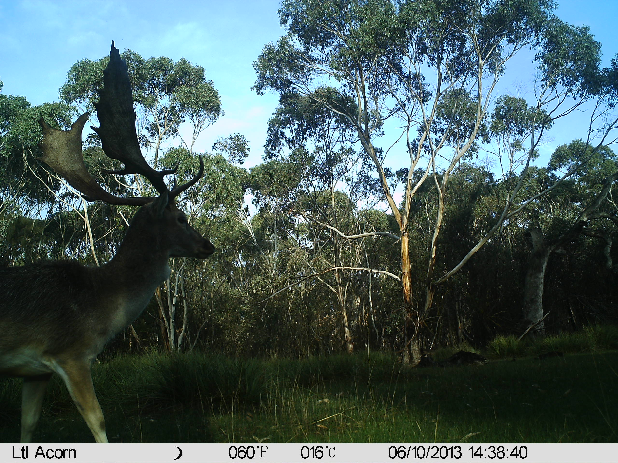 Name:  Buck close to trail cam.JPG