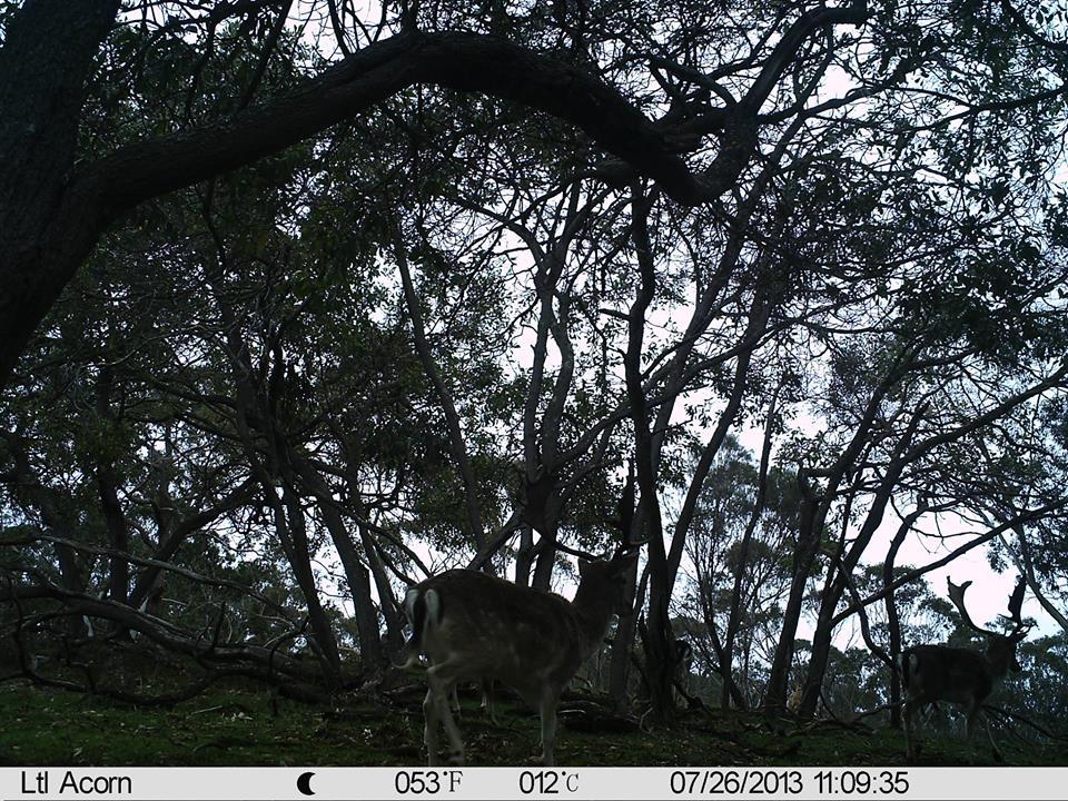 Name:  buck in bush.jpg Views: 363 Size:  214.7 KB