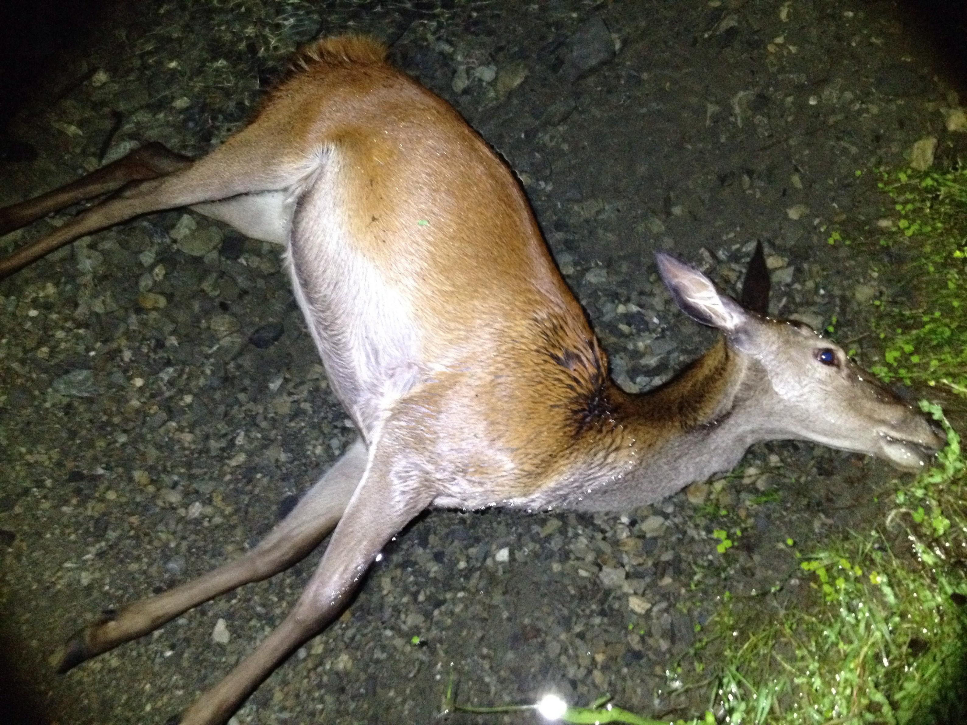 Name:  Deer.jpg Views: 845 Size:  994.1 KB