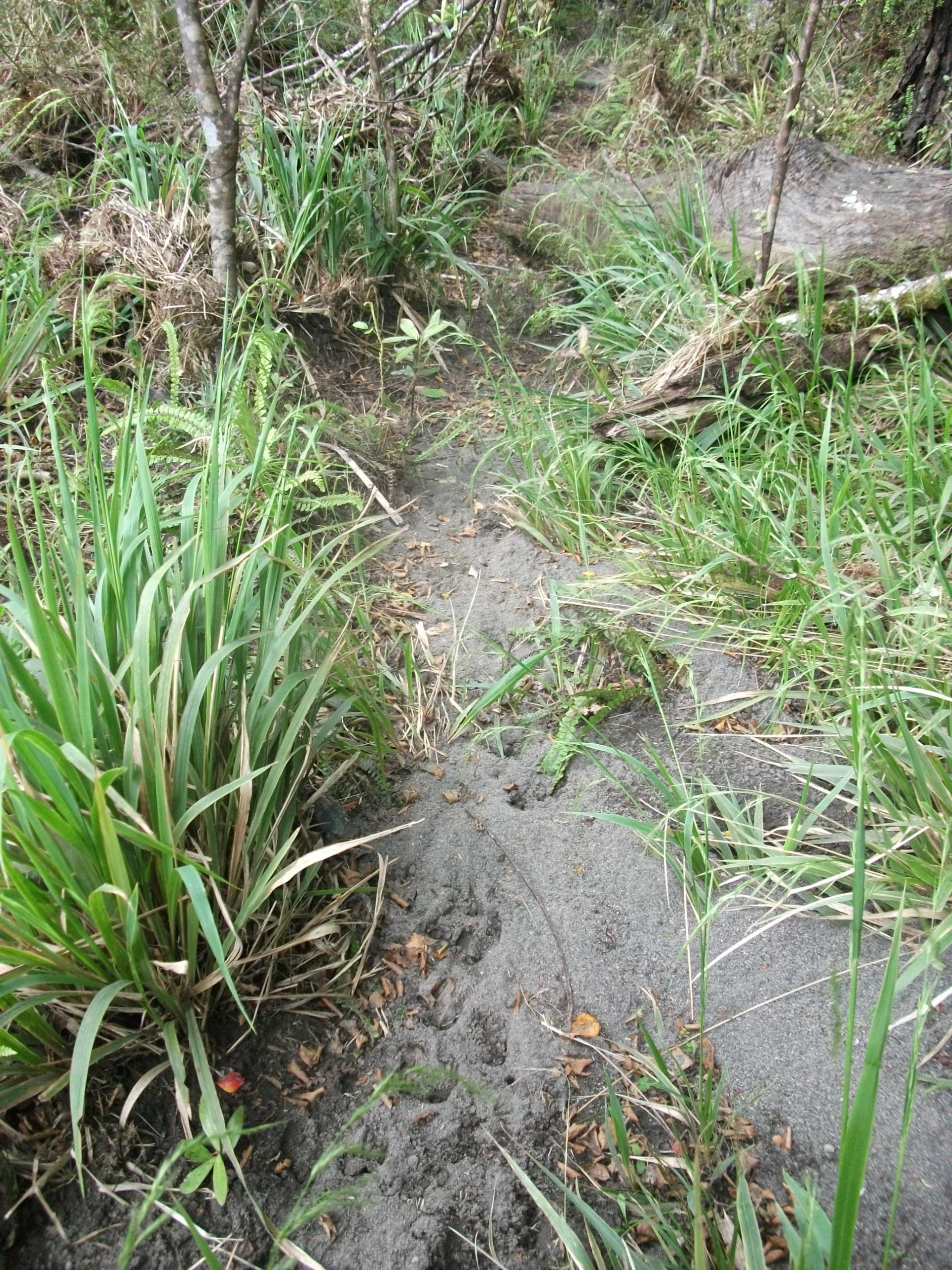 Name:  DSCF1166 - Bottom of Bull Mound Creek sign.jpg Views: 1234 Size:  977.6 KB