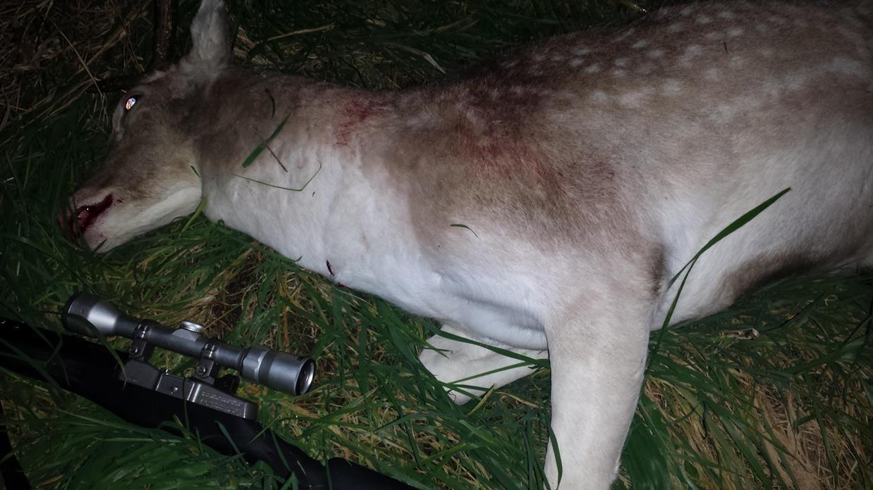 Name:  deer1 (Copy).jpg Views: 237 Size:  148.7 KB