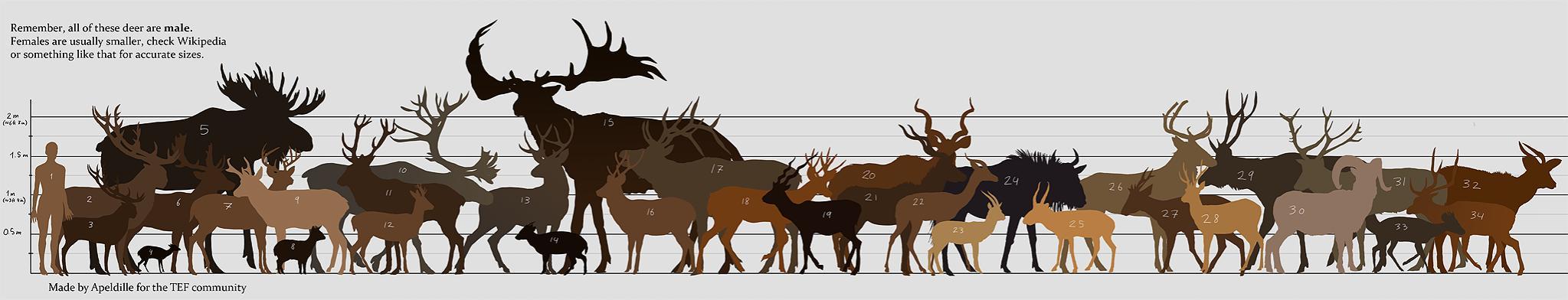 bighorn sheep hunting