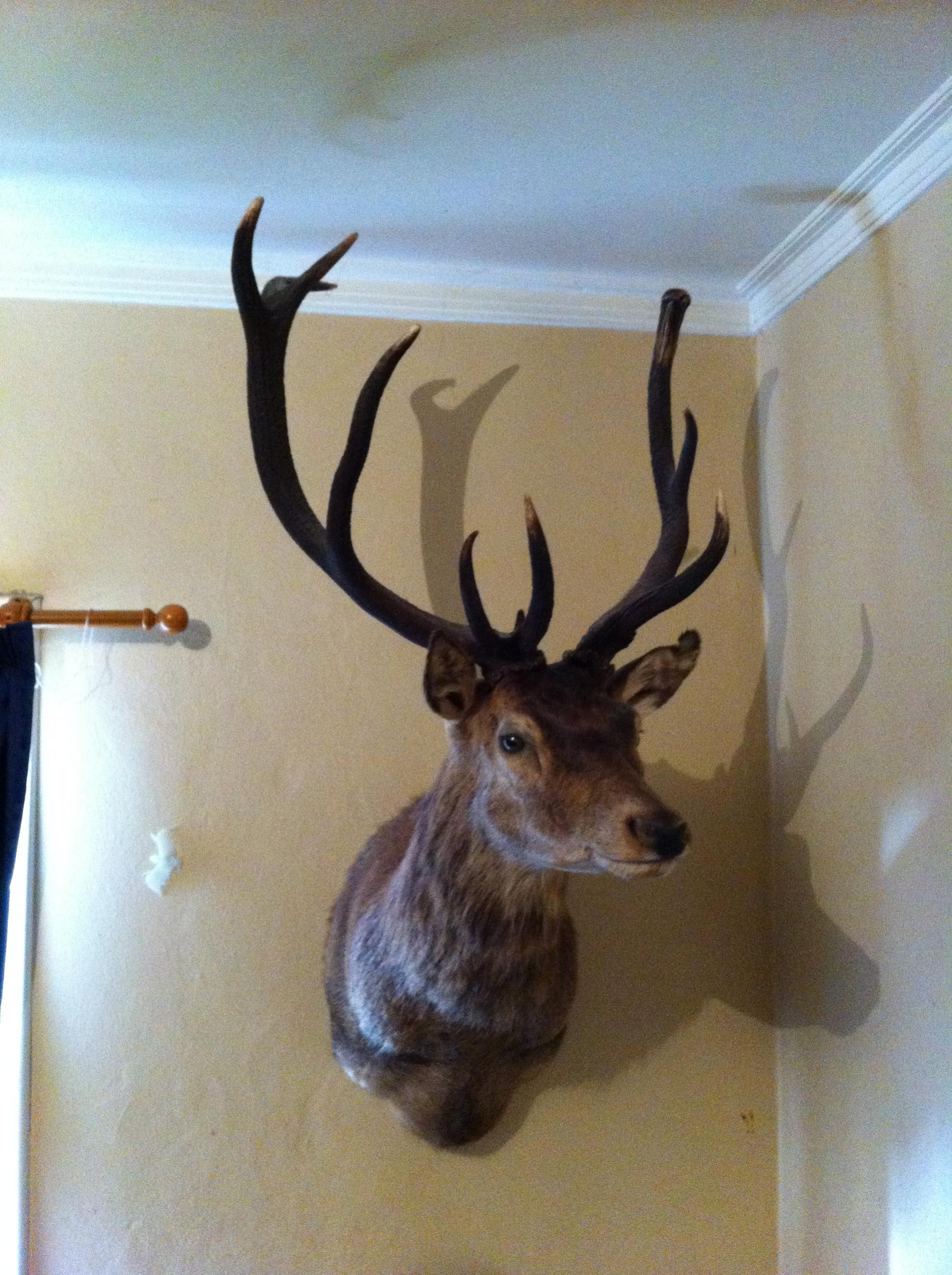 Name:  First stag.jpg Views: 576 Size:  693.0 KB