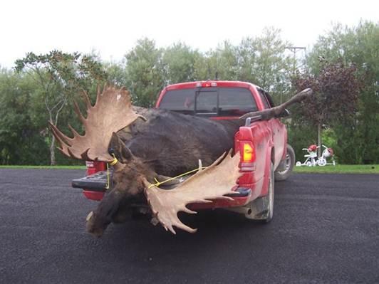 Name:  moose .1.jpg Views: 461 Size:  29.6 KB
