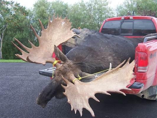 Name:  moose.2.jpg Views: 535 Size:  37.7 KB