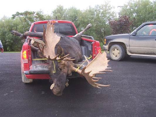 Name:  moose.5.jpg Views: 339 Size:  32.8 KB