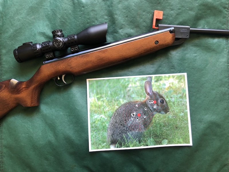 Name:  Weihrauch HW95 and rabbit target 800.jpeg