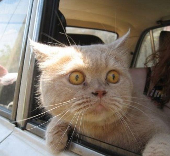 Name:  catincar.jpg Views: 455 Size:  48.9 KB