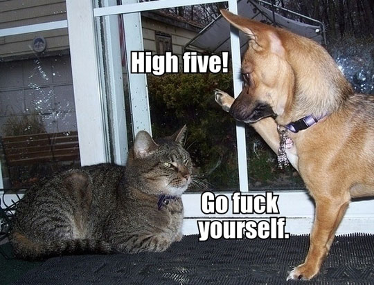 Name:  funny-high-five-dog-cat.jpg