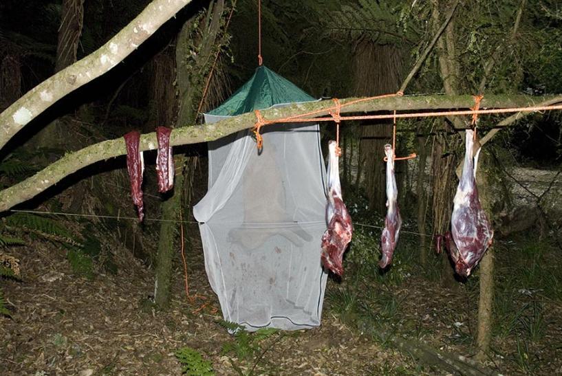 Name:  Meat hanging.jpg Views: 975 Size:  98.7 KB