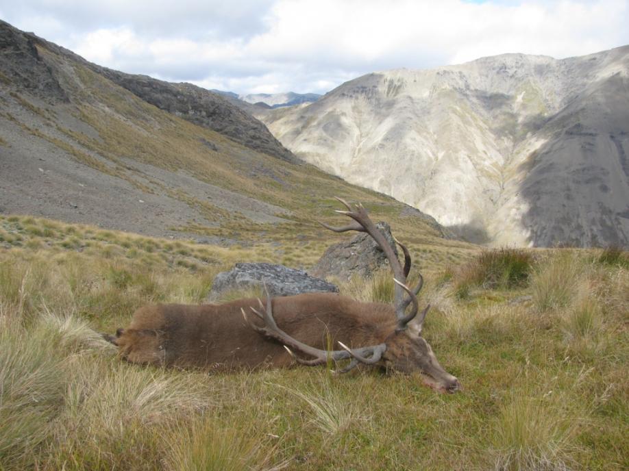 Name:  Kudu 5.jpg Views: 264 Size:  94.6 KB
