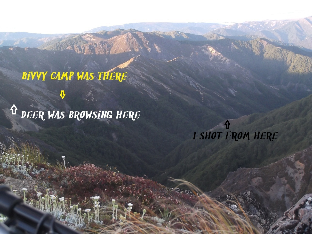 Name:  shot from here.jpg Views: 630 Size:  472.1 KB