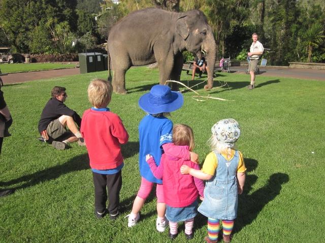 Name:  Kids Zoo (640x480).jpg Views: 585 Size:  282.6 KB