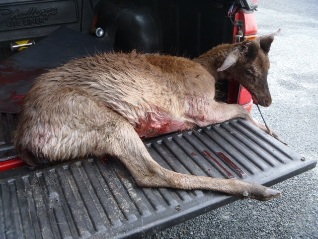 Name:  deer 4.JPG Views: 327 Size:  267.4 KB